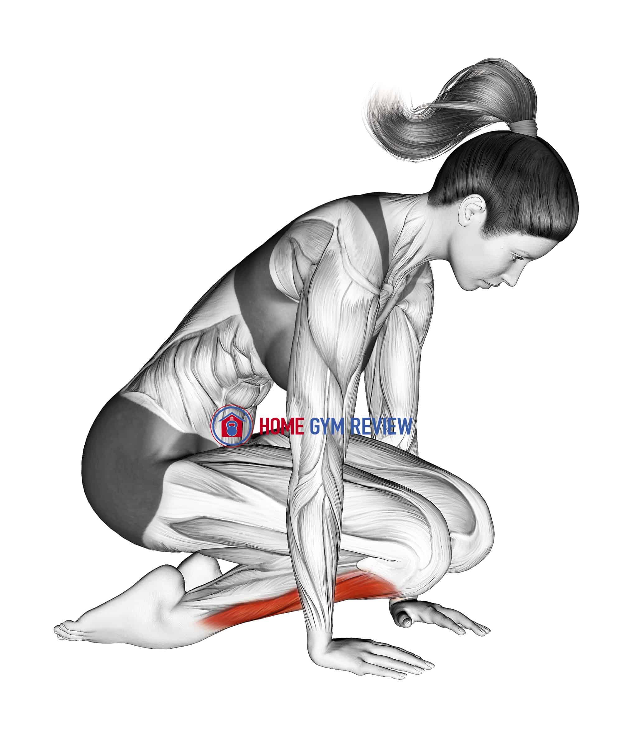 Double Kneeling Shin Stretch