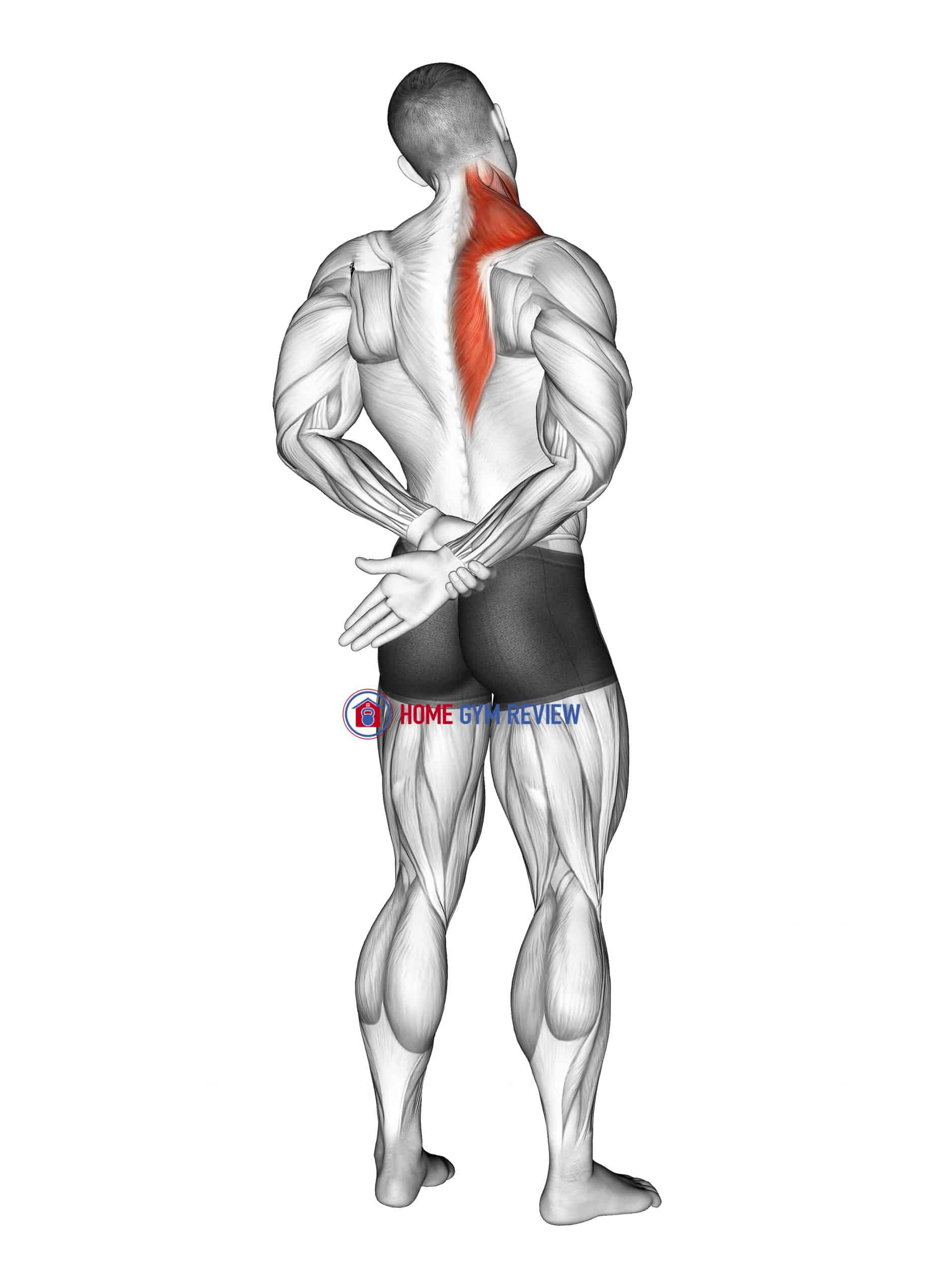 Adduction Of Arm In Back Stretch