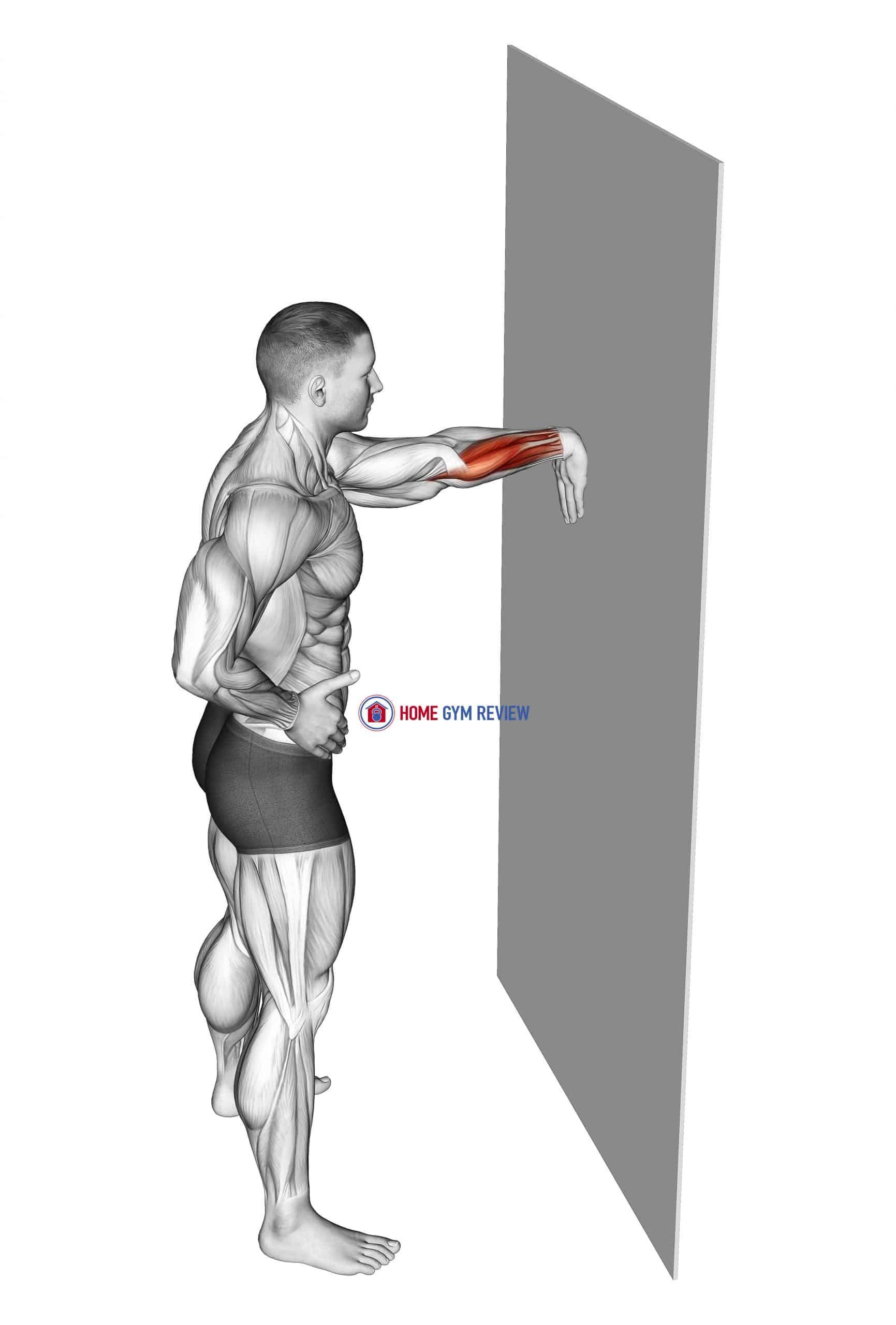 Wall Flexors Stretch
