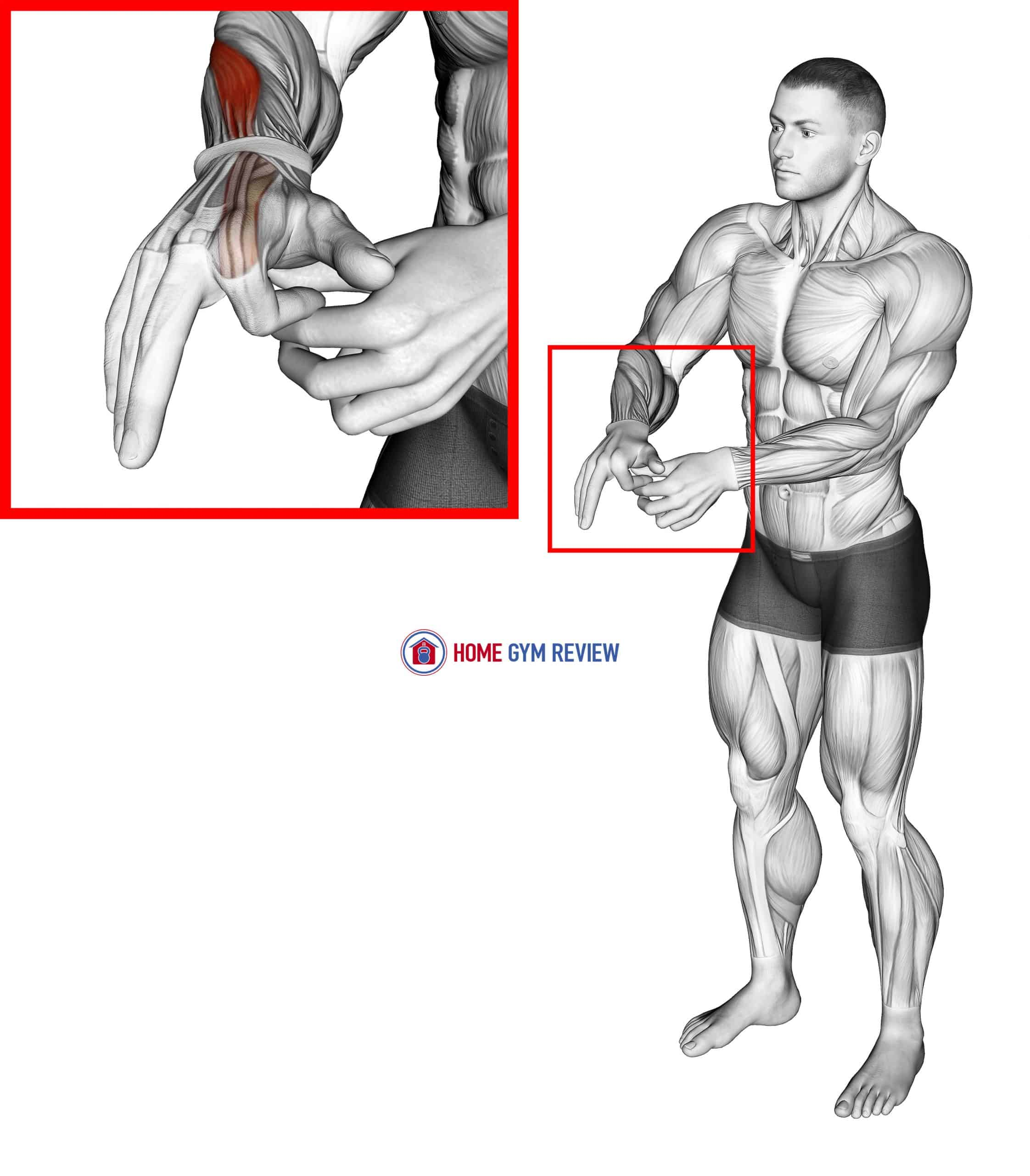 Flexion Finger Stretch