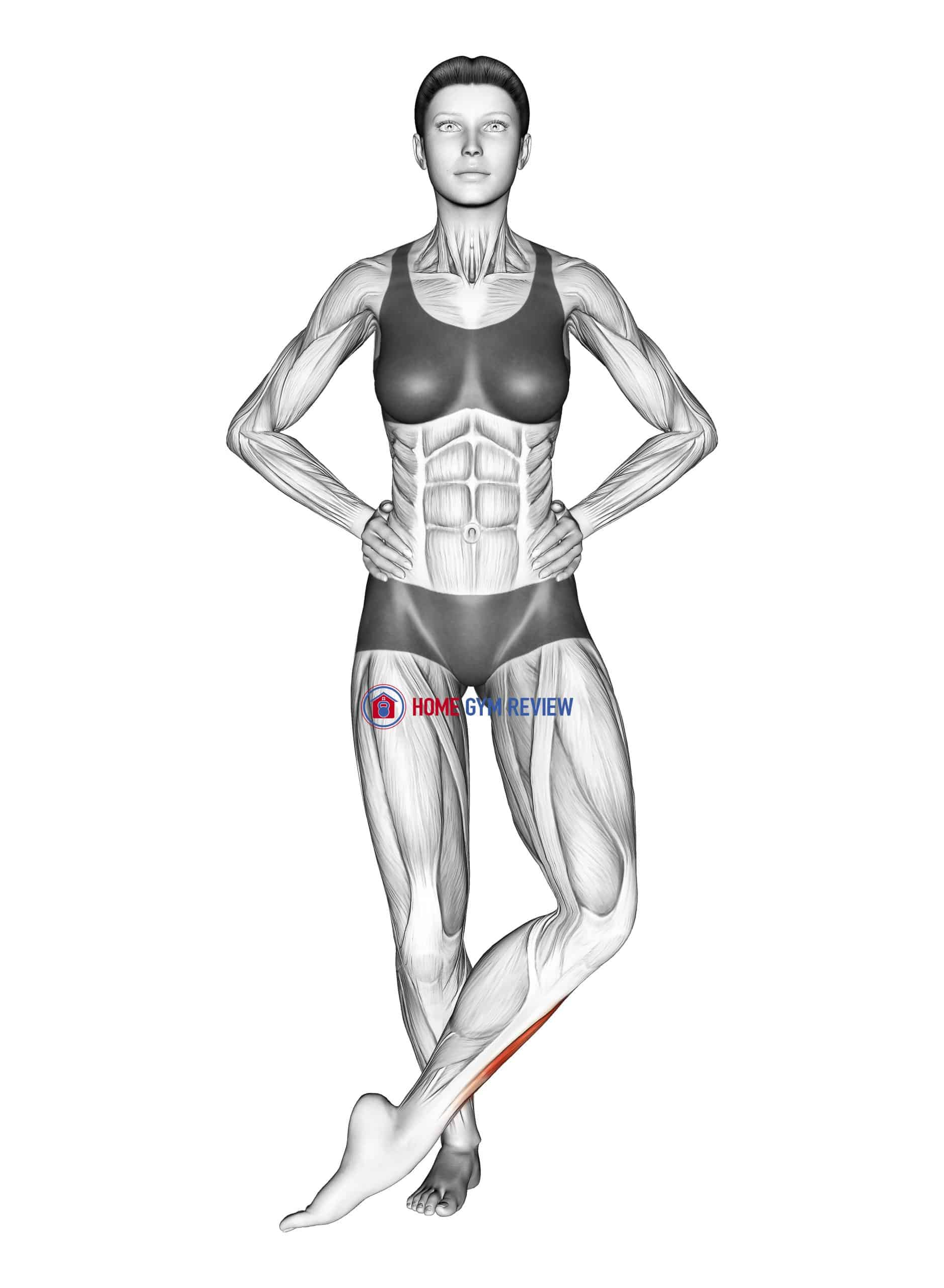 Front Cross Over Shin Stretch