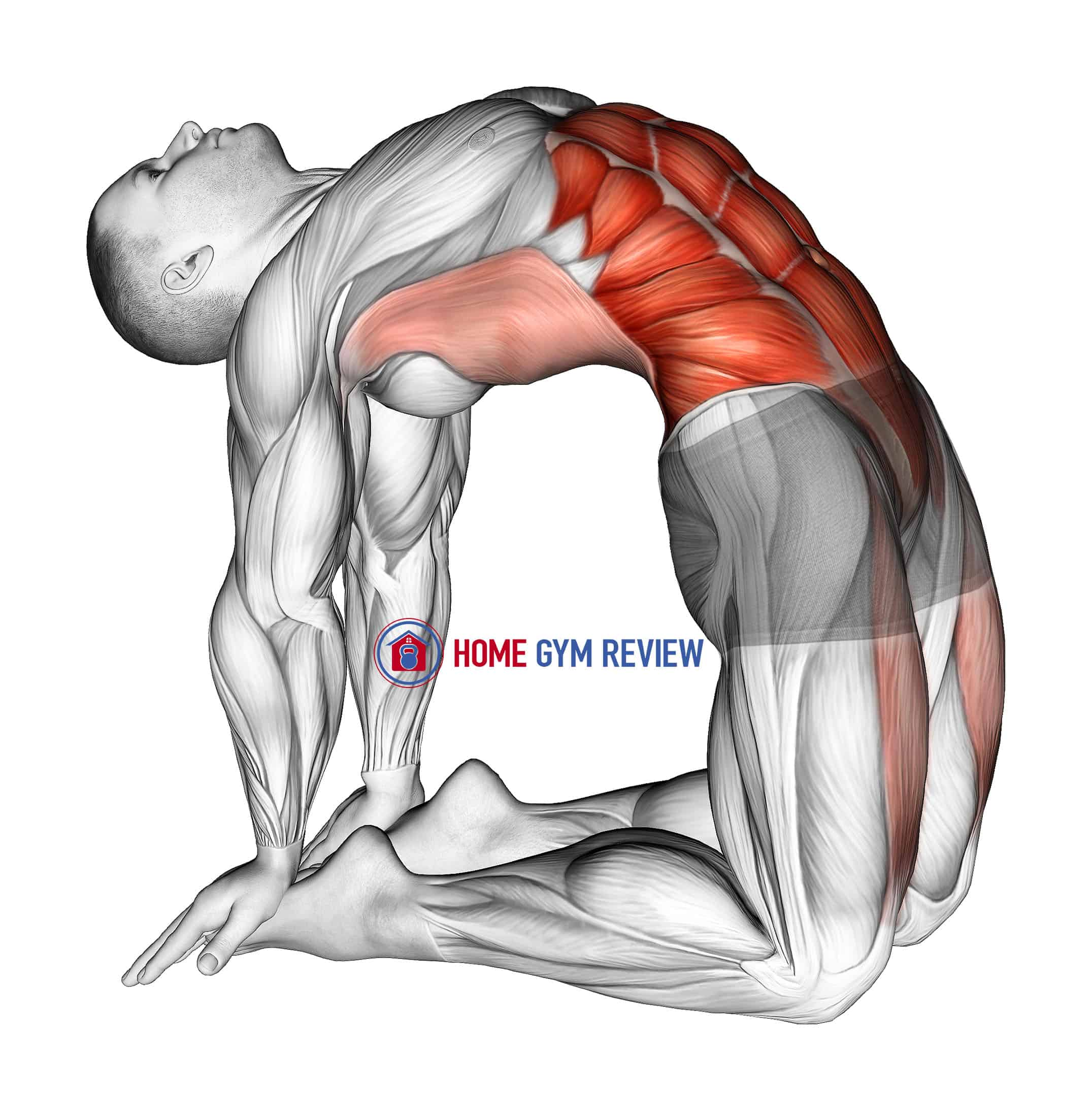 Hip Extension On Knees