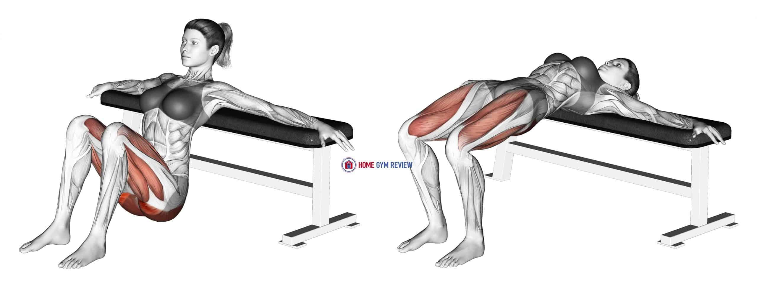 Hip Thrusts (Female)