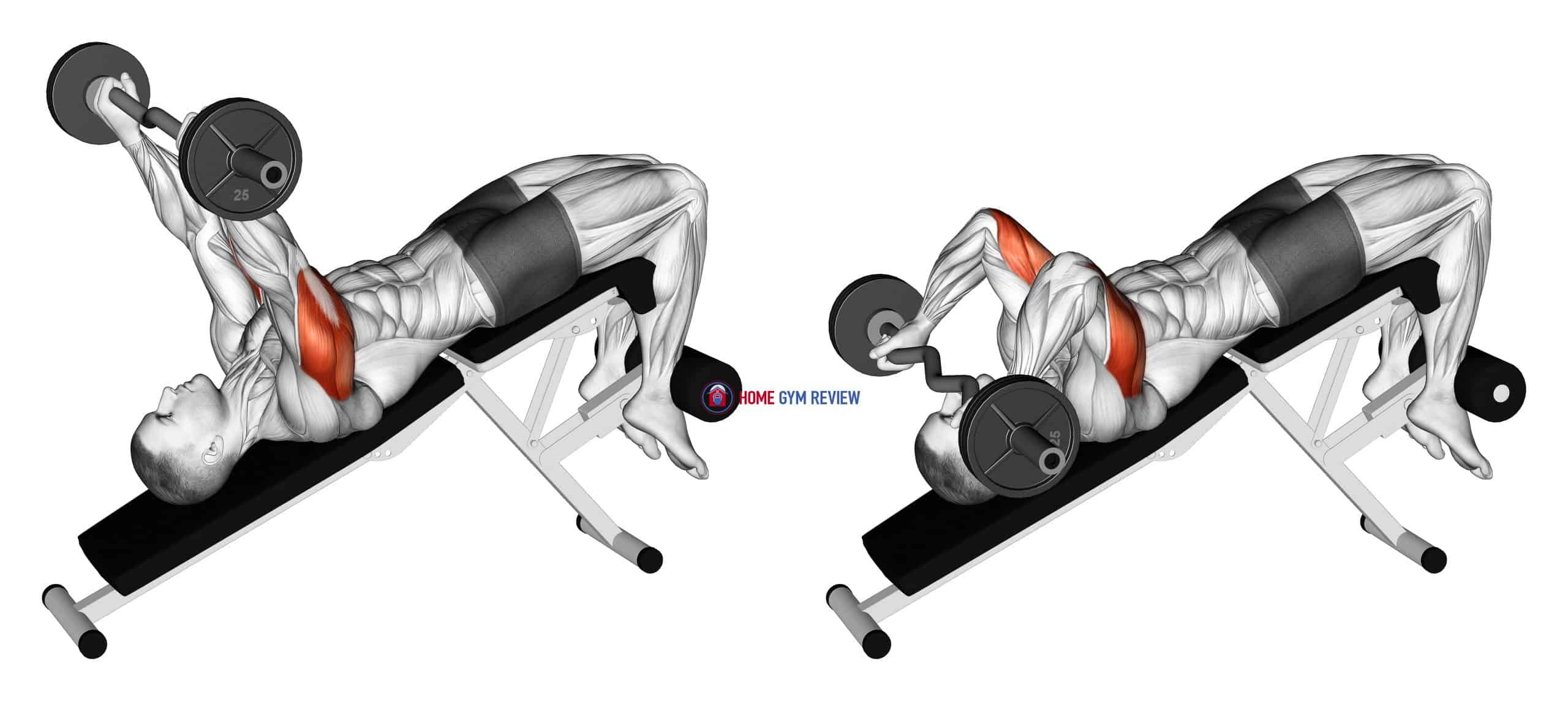 EZ Barbell Decline Triceps Extension