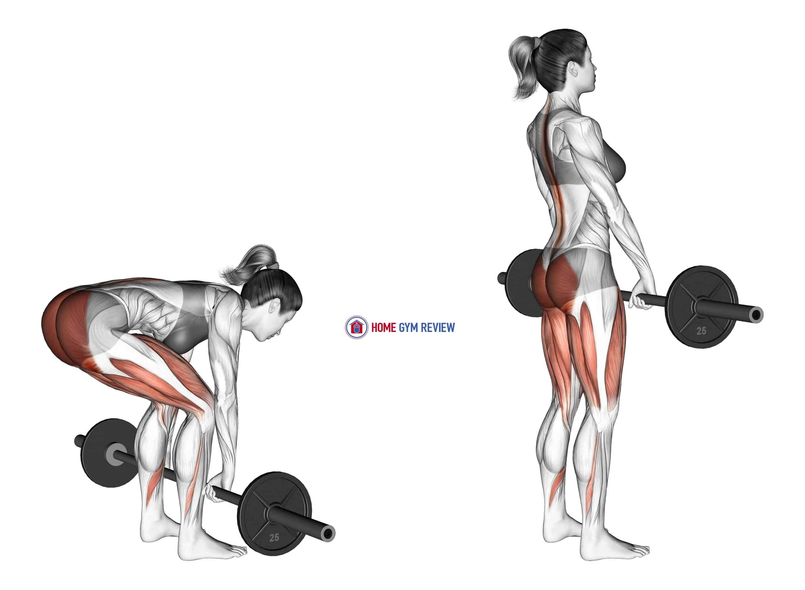 Barbell Deadlift (female)