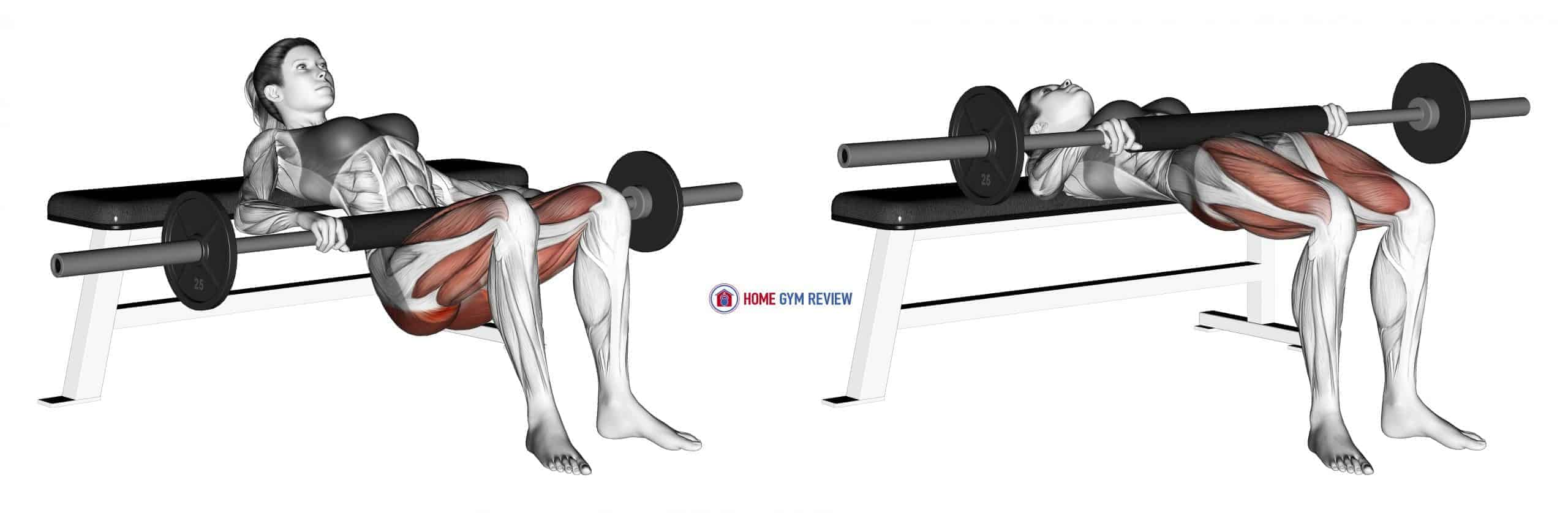 Barbell Hip Thrust (female)