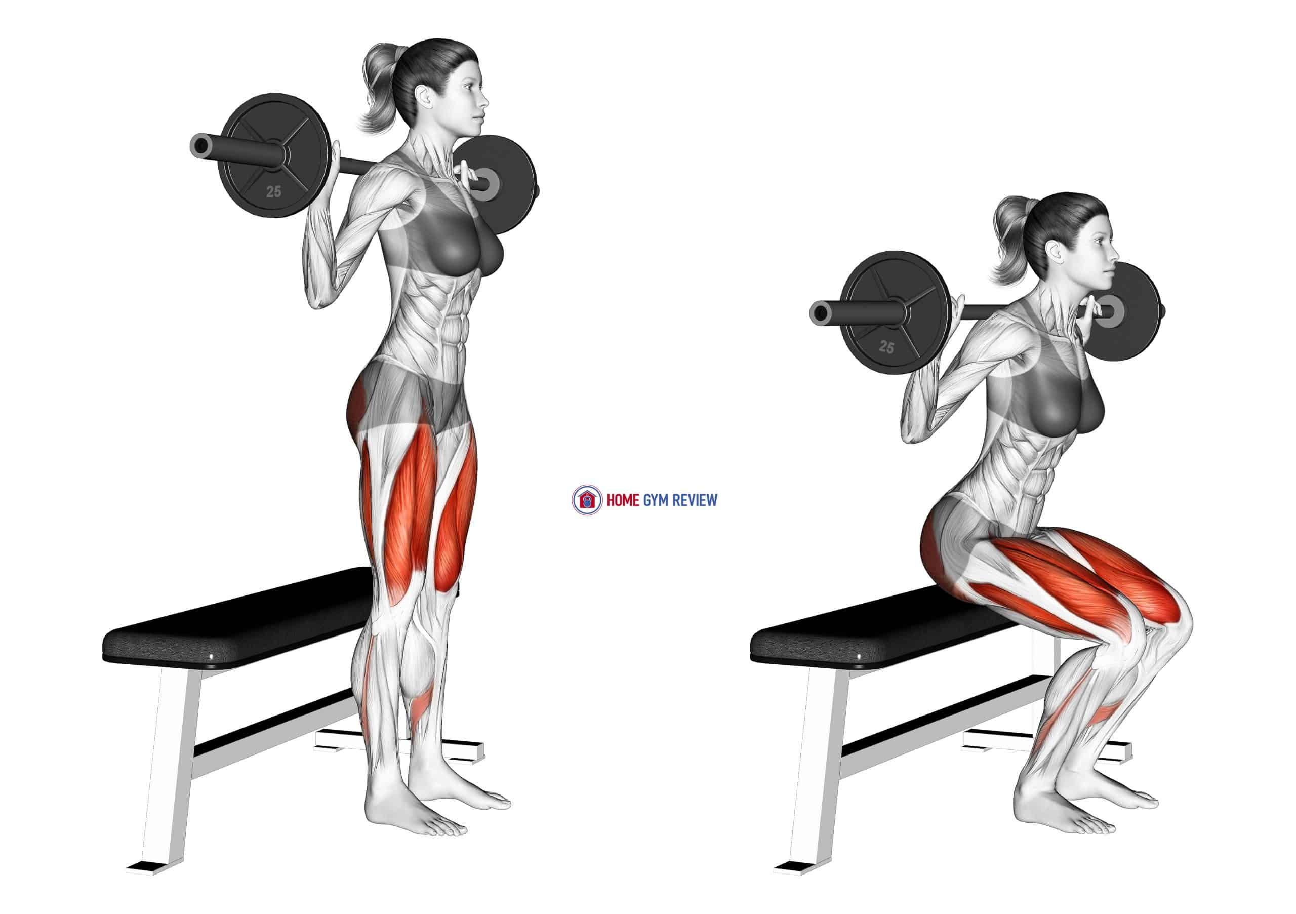 Barbell Bench Squat (female)