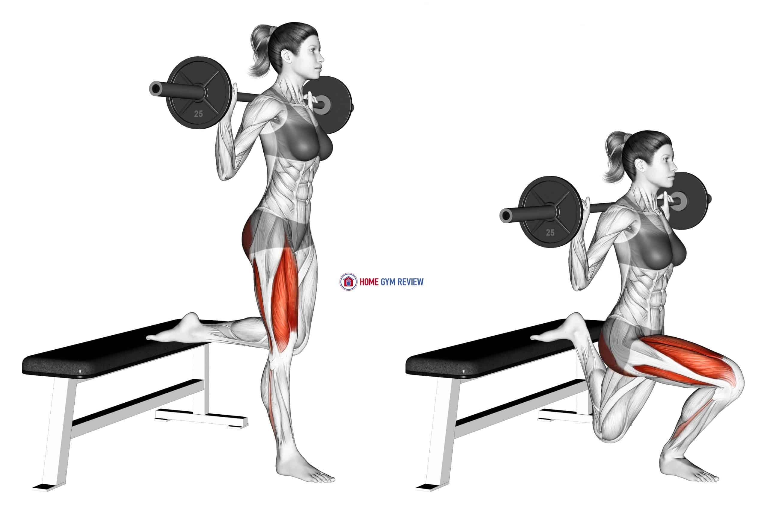 Barbell Single Leg Split Squat (female)