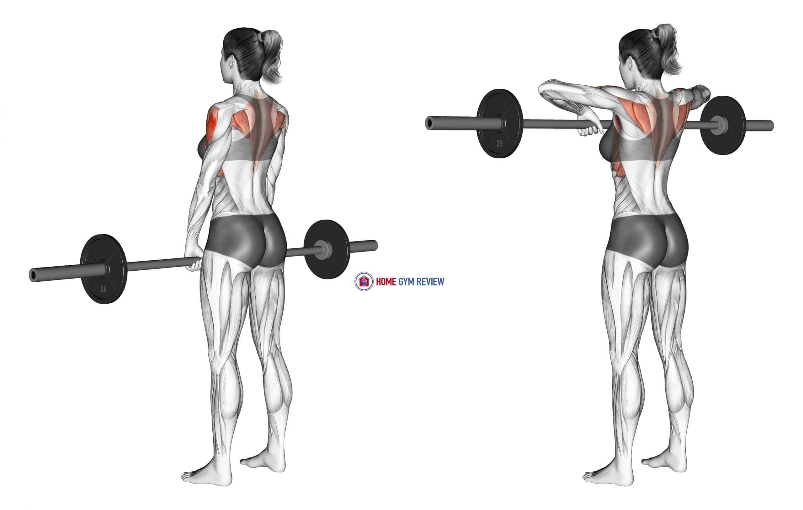 Barbell Upright Row (female)
