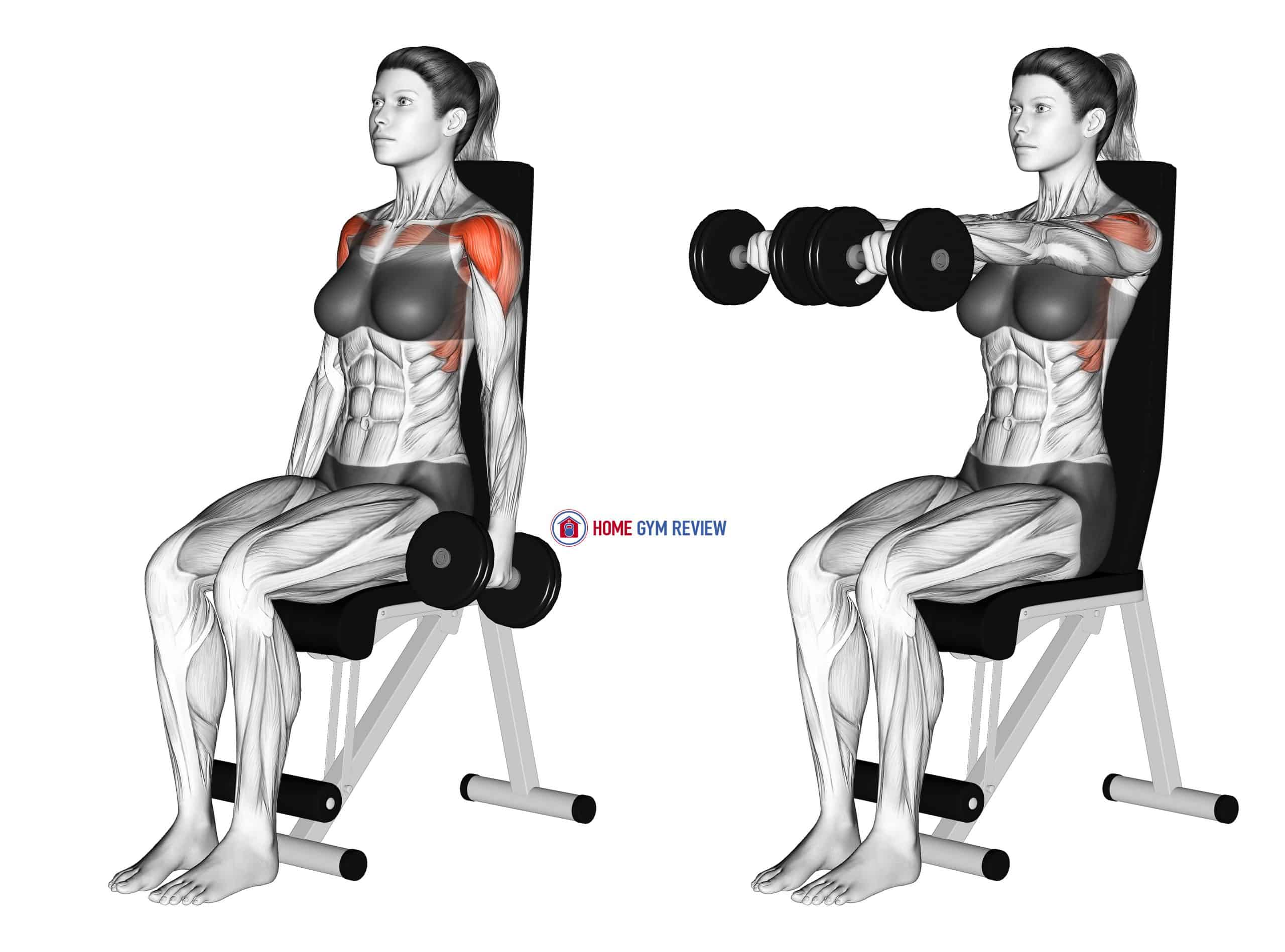 Dumbbell Seated Front Raise (female)