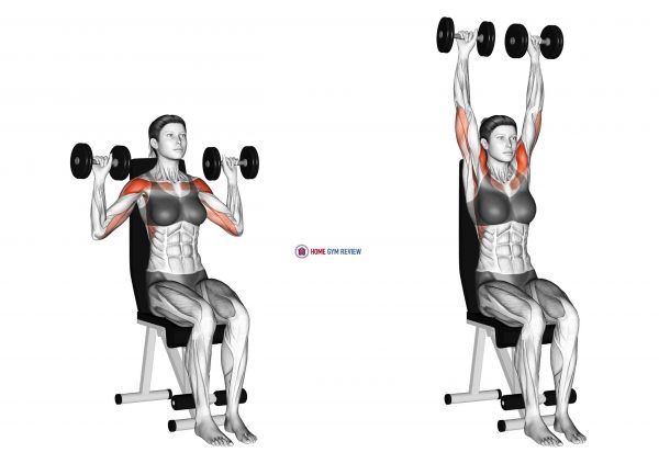 Dumbbell Seated Shoulder Press (female)
