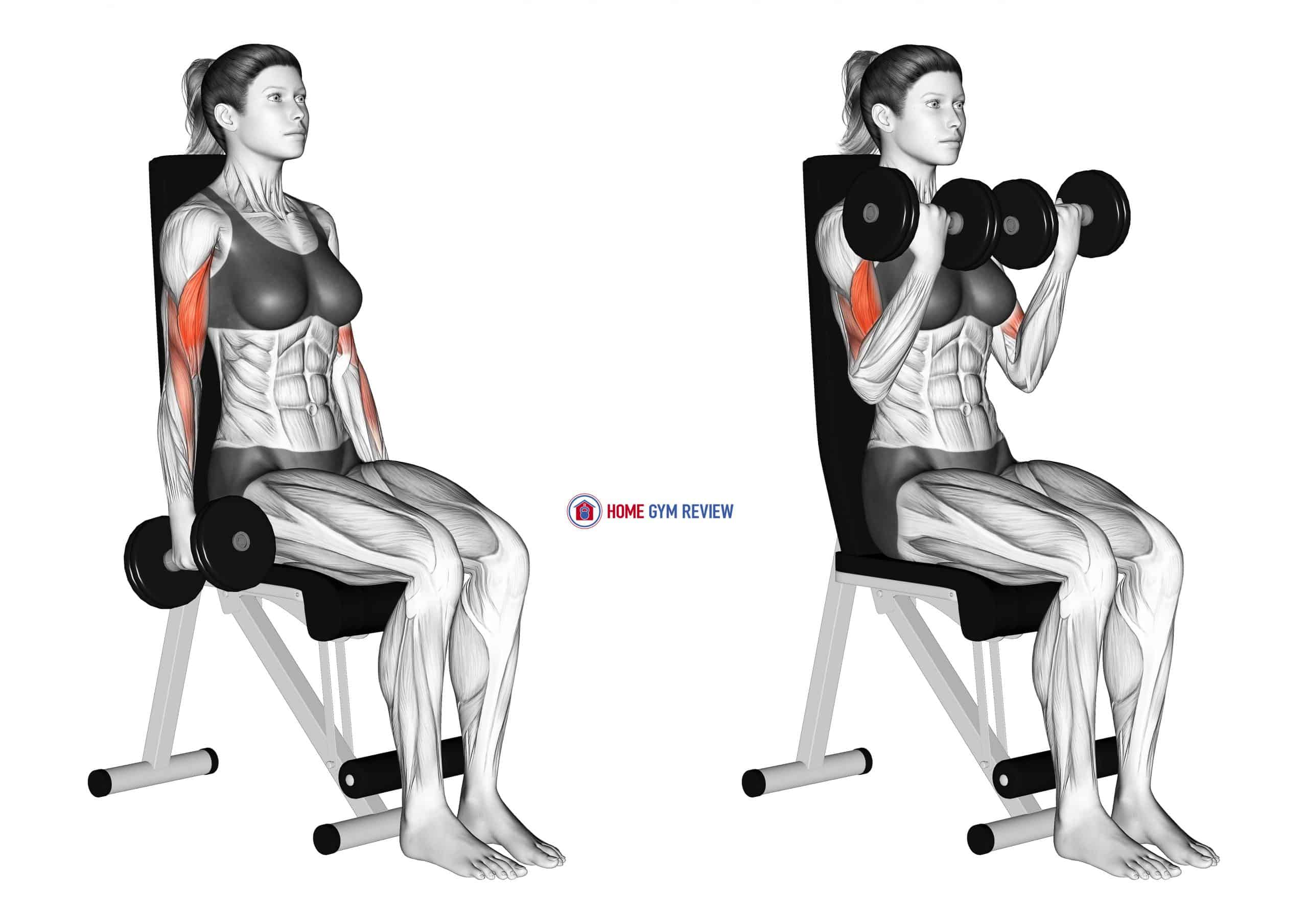 Dumbbell Seated Curl (female)