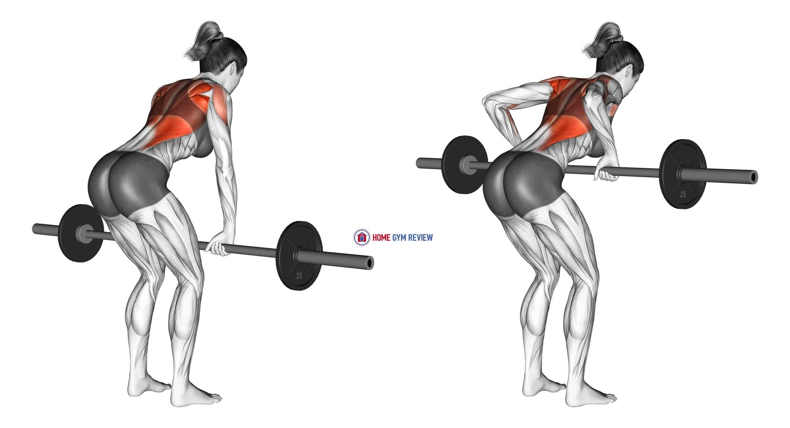 Barbell Bent Over Row (female)
