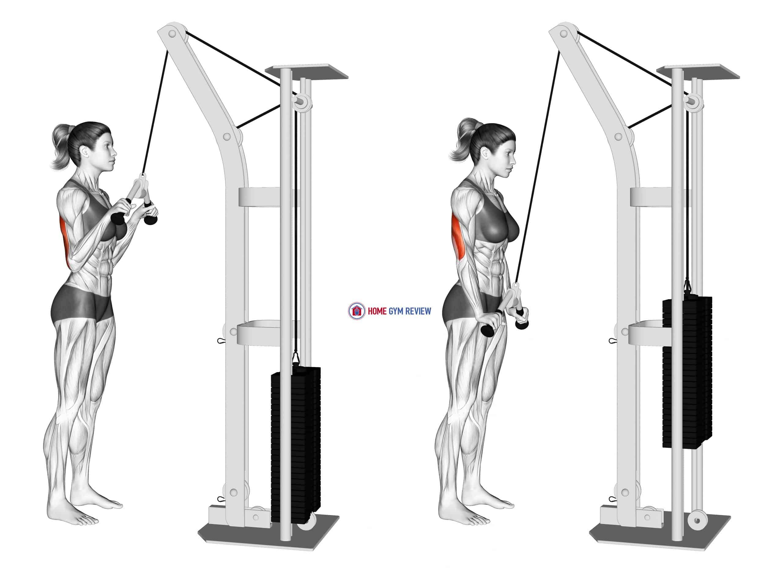 Cable Triceps Pushdown (V bar) (female)