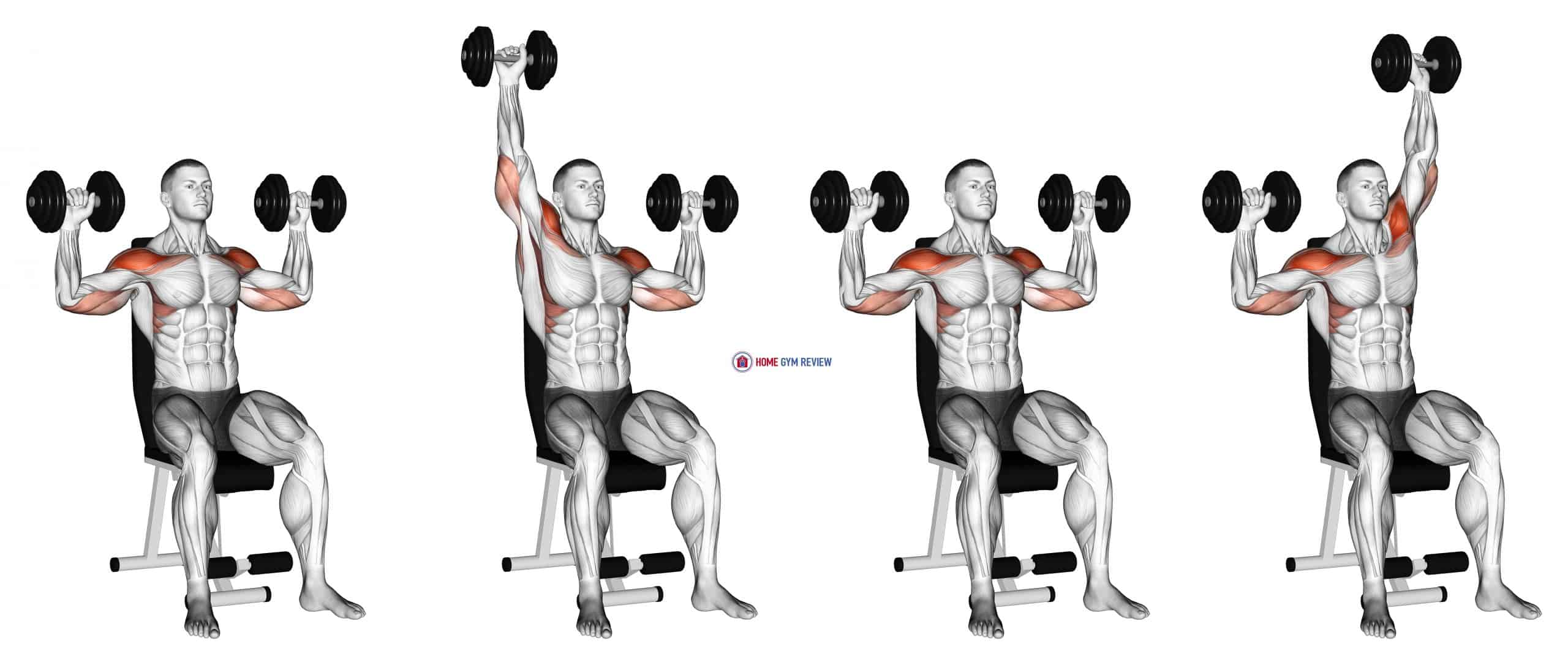 Dumbbell Seated Alternate Shoulder