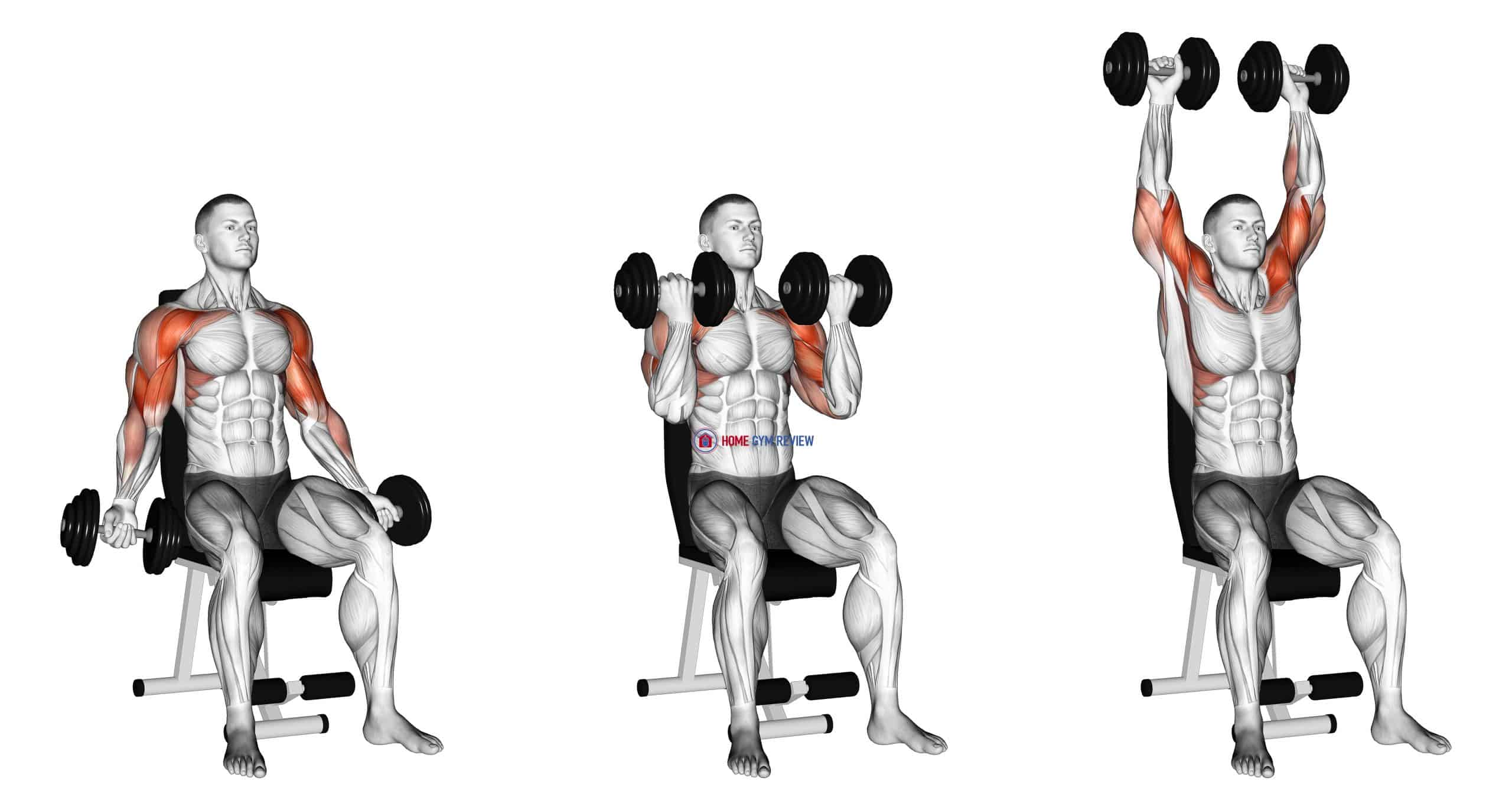 Dumbbell Seated Biceps Curl to Shoulder Press