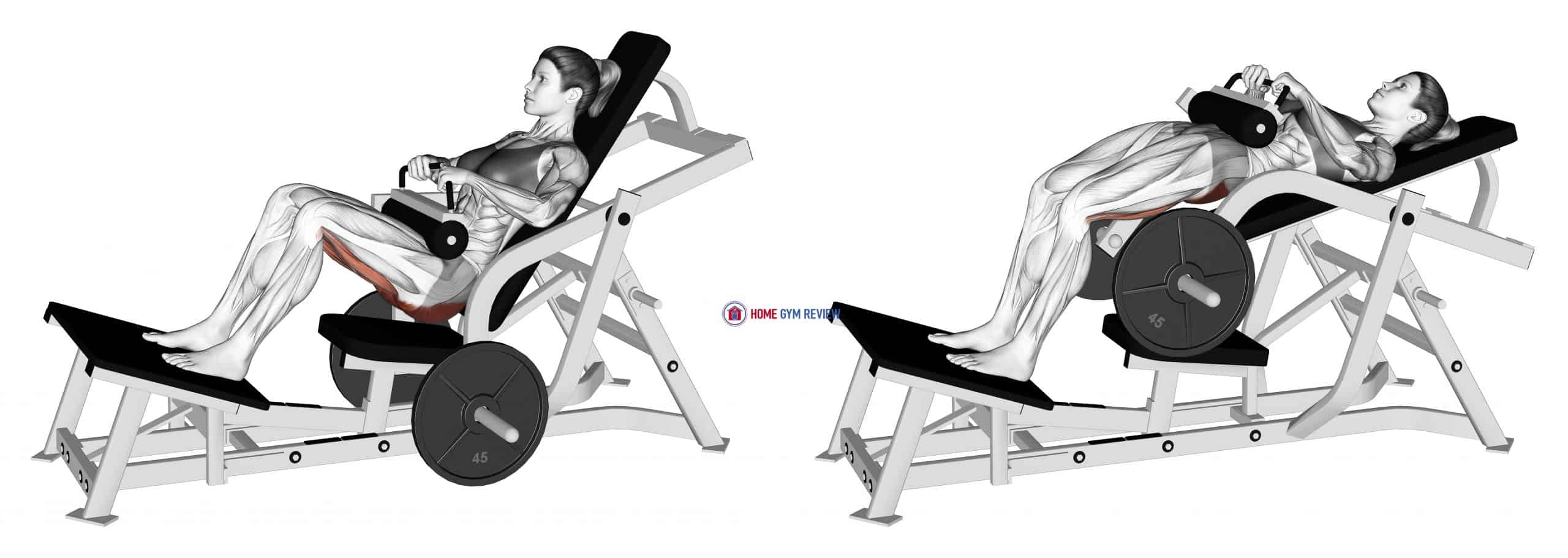 Lever Hip Thrust (plate loaded) (female)