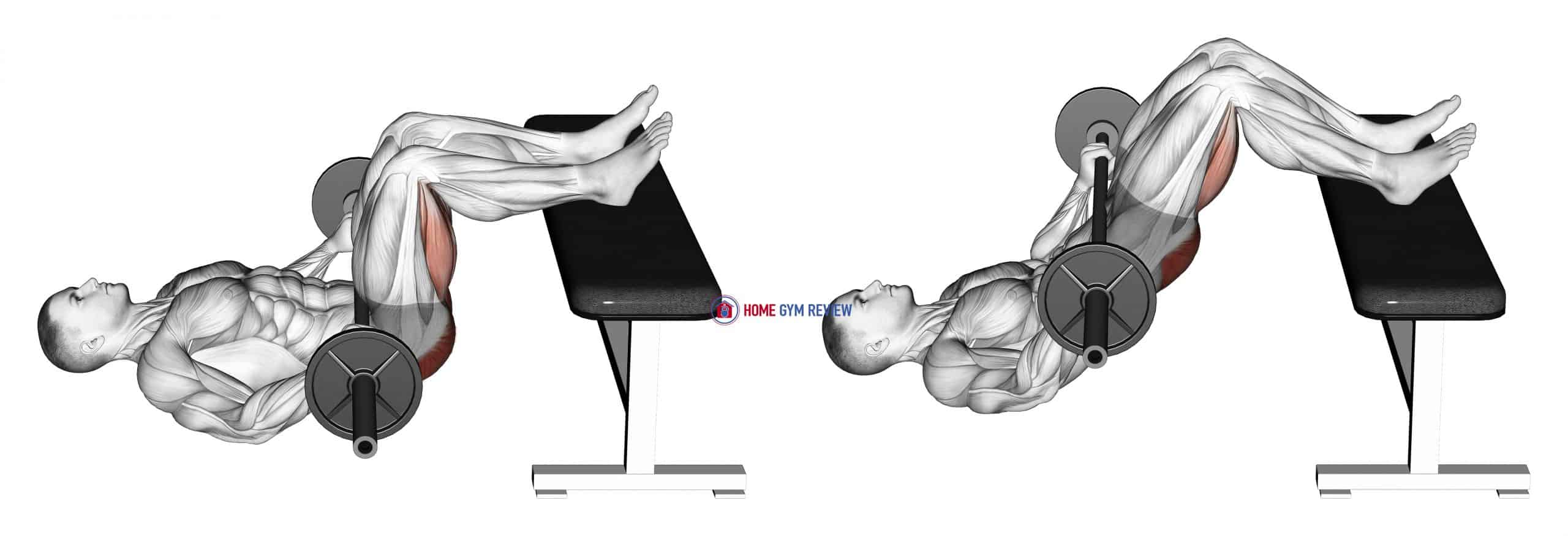 Barbell Glute Bridge Two Legs on Bench (male)
