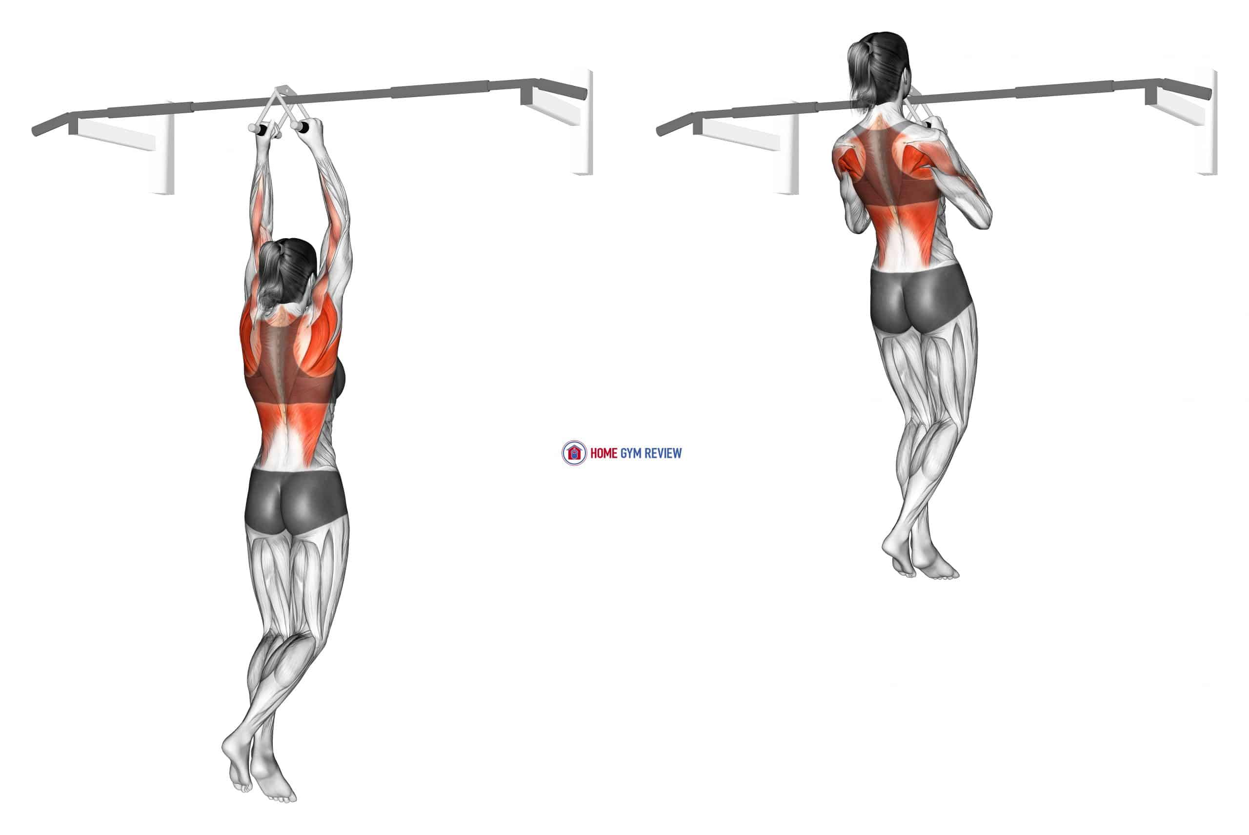 Chin ups (narrow parallel grip) (female)