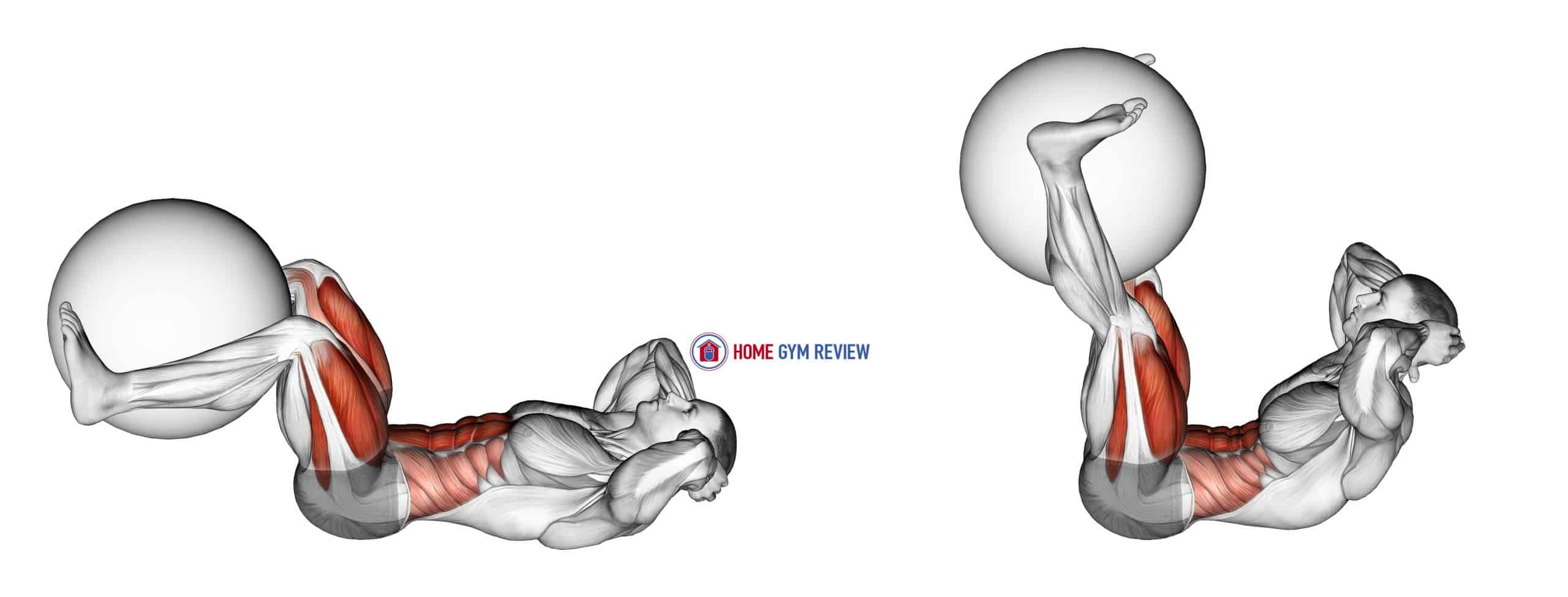 Leg Extension Crunch (with Stability Ball) (male)