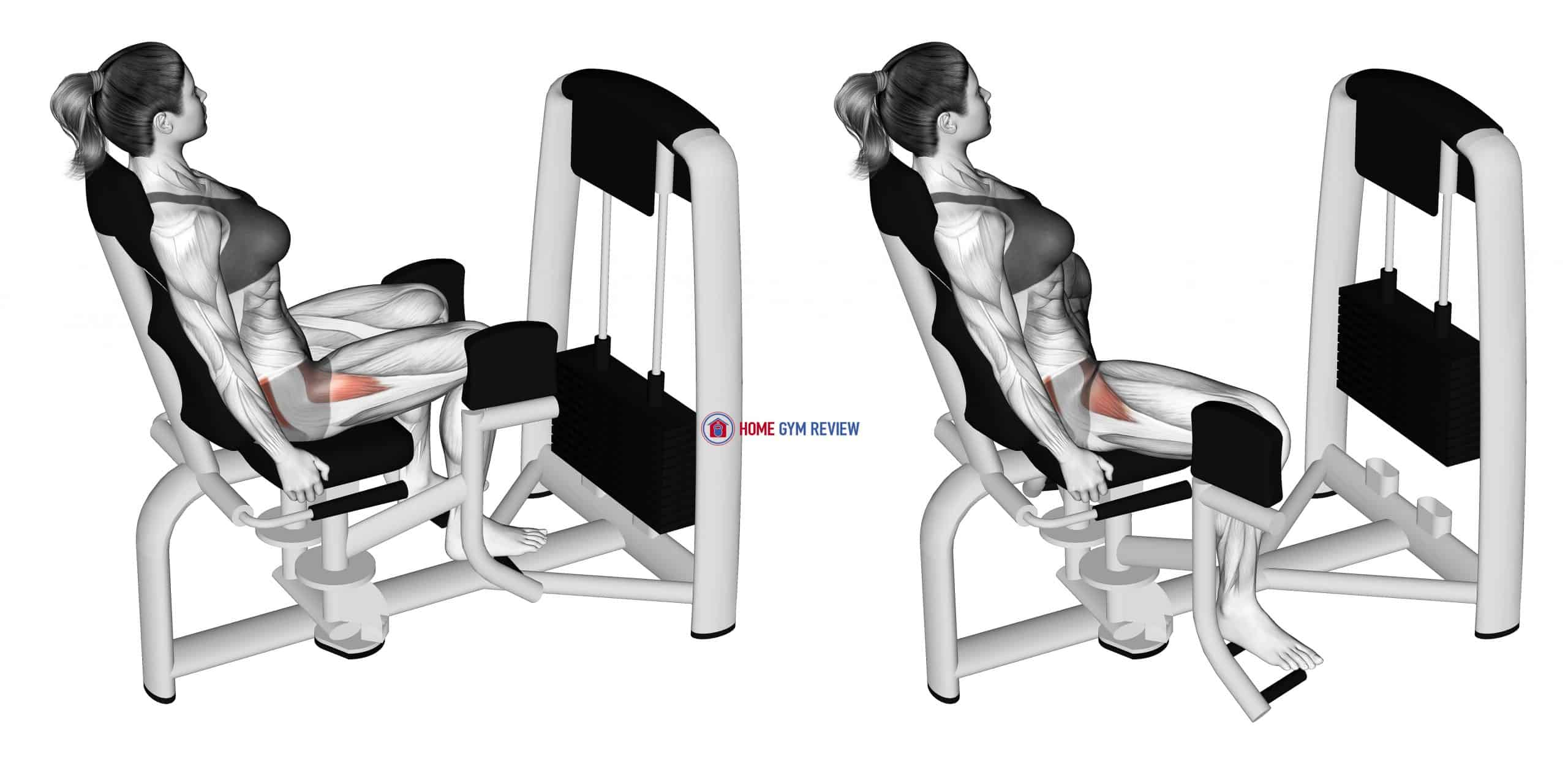 Lever Seated Hip Abduction (female)
