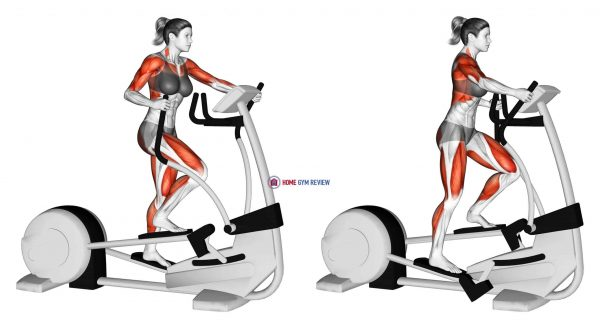 Walk Elliptical Cross Trainer (female)