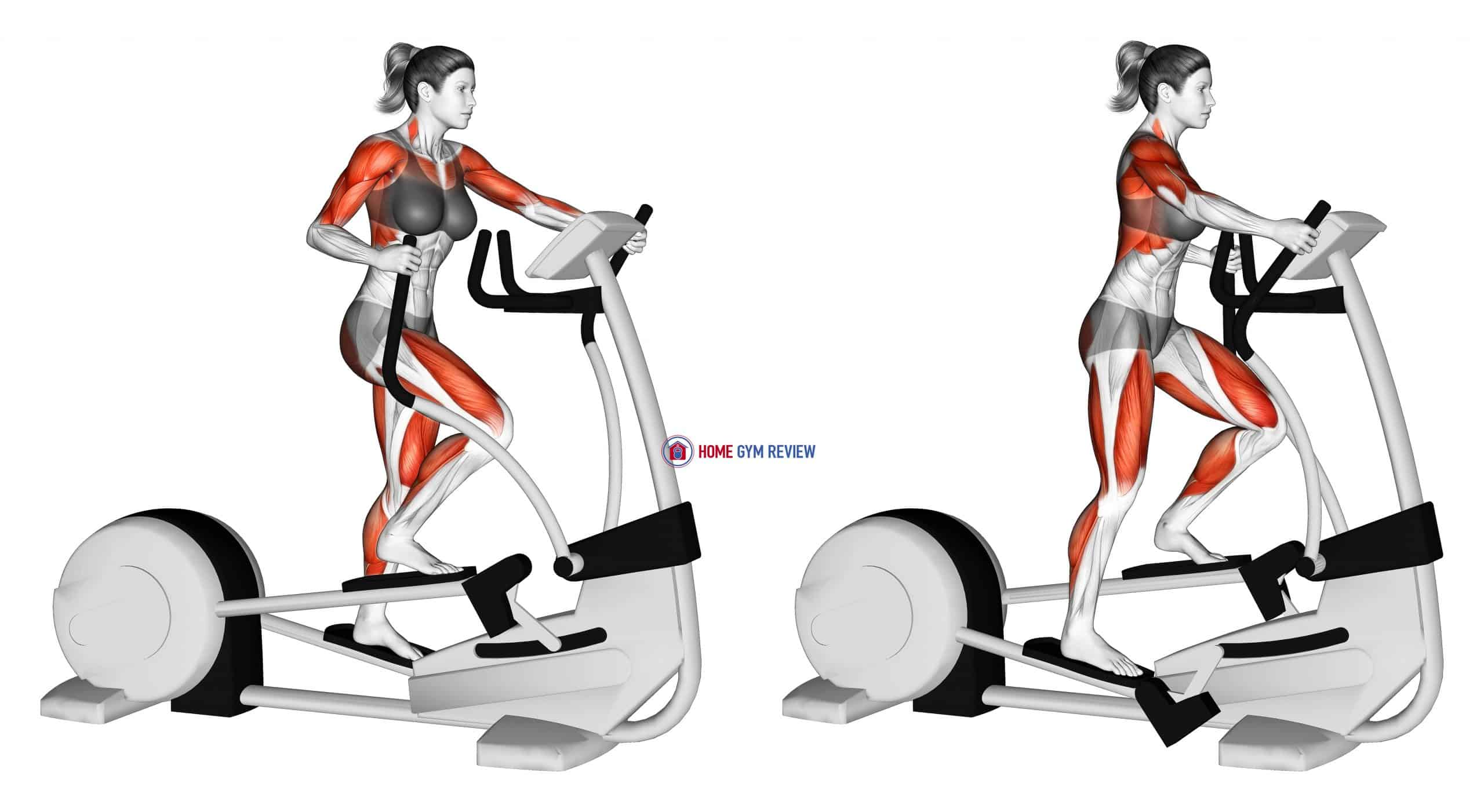 Walk Elliptical Cross Trainer (female)