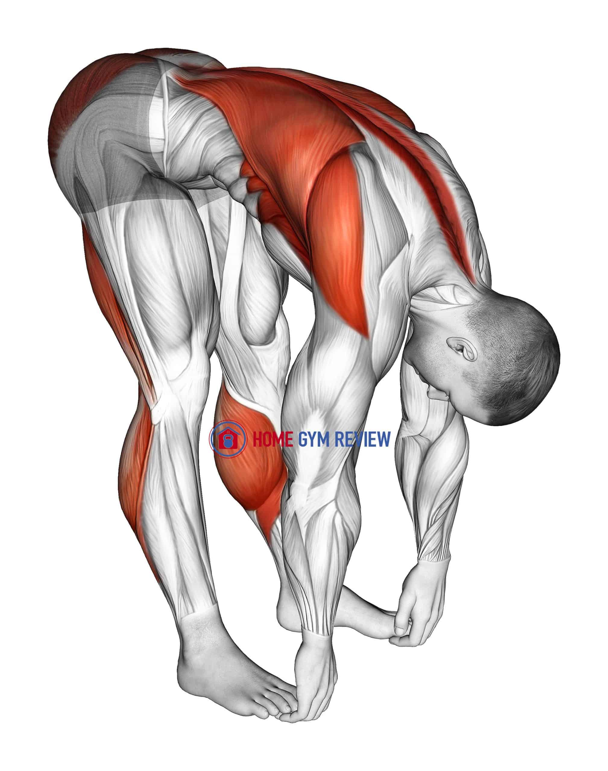 Standing Hamstrings and Back Stretch