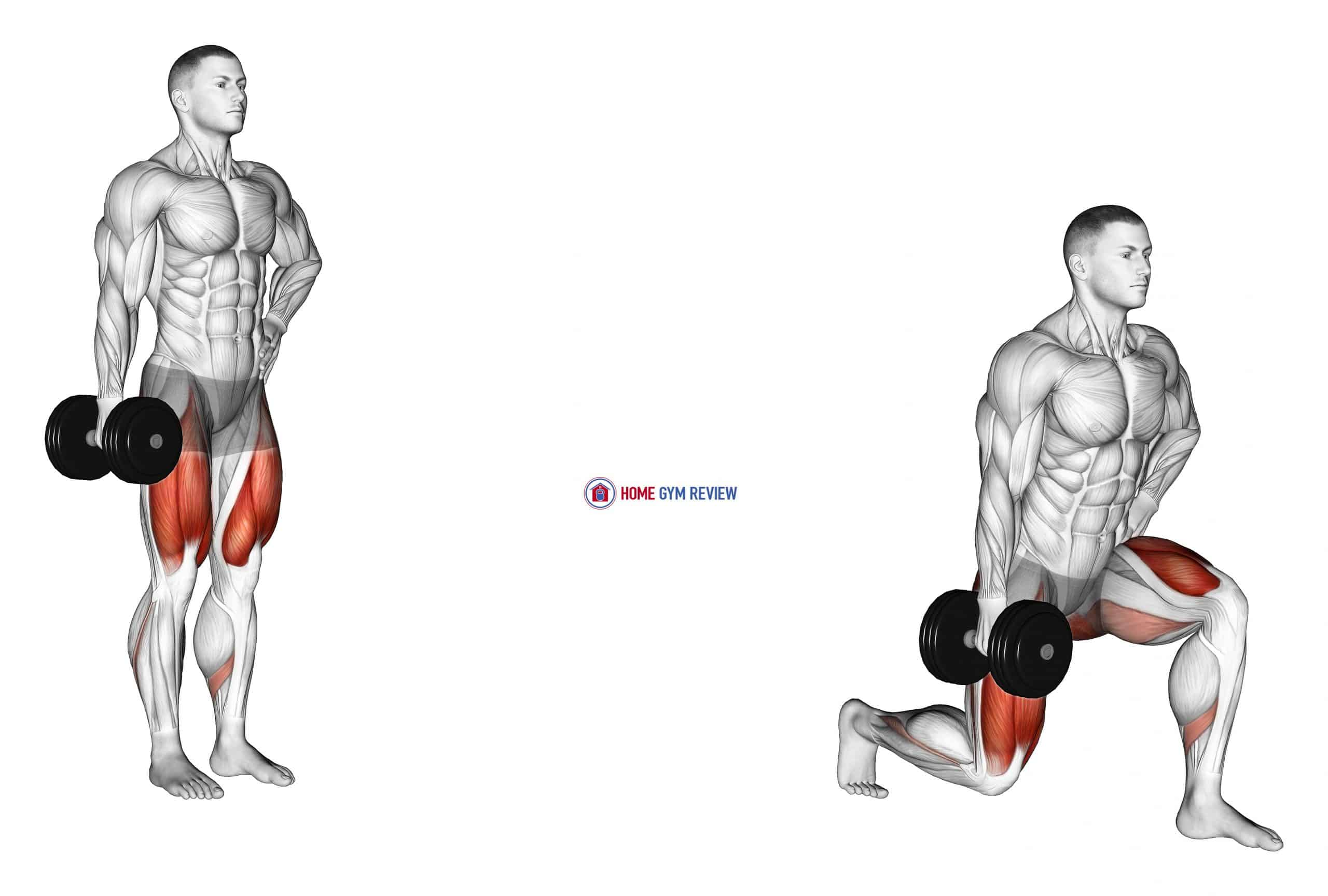 Dumbbell Contralateral Forward Lunge