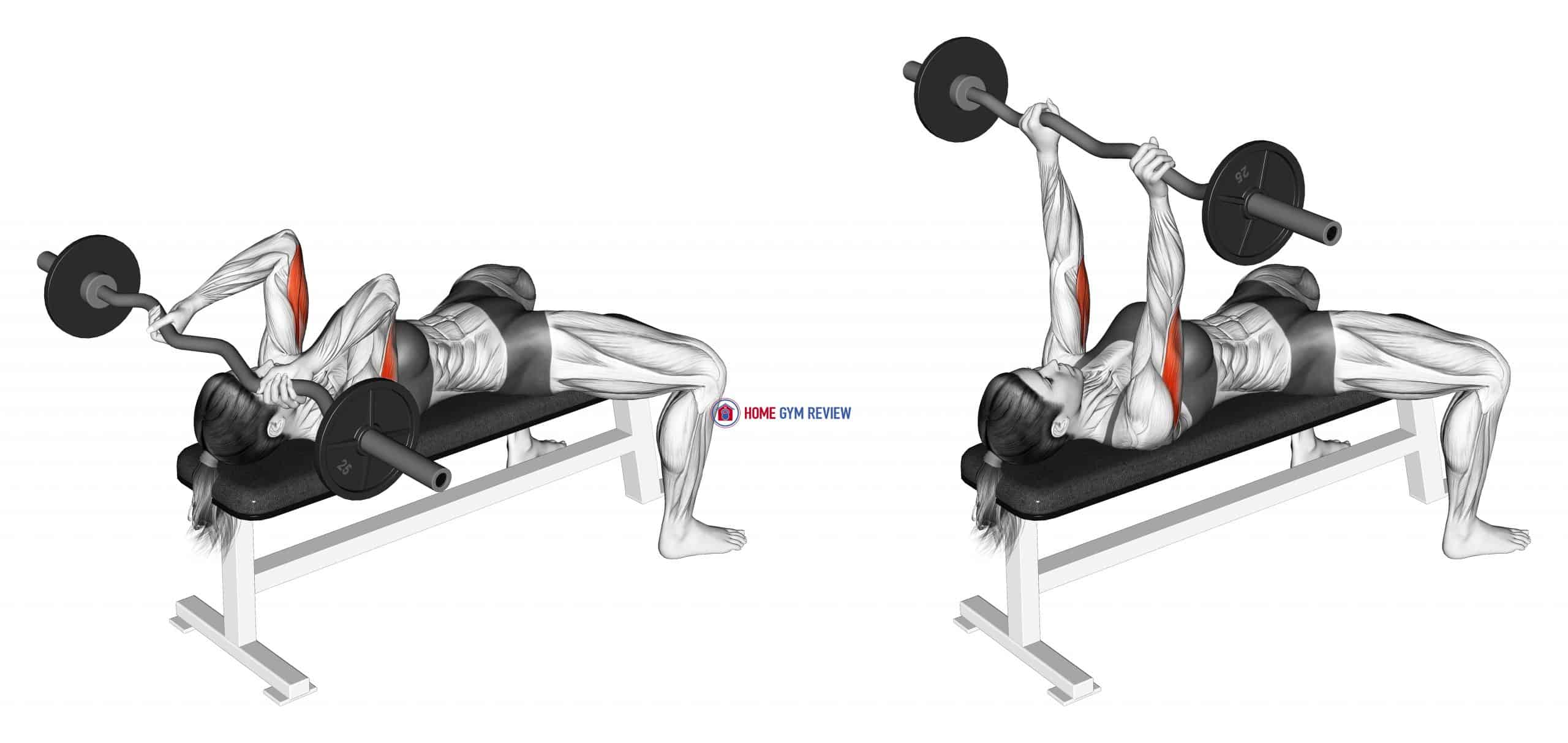EZ-Barbell Lying Triceps Extension (female)