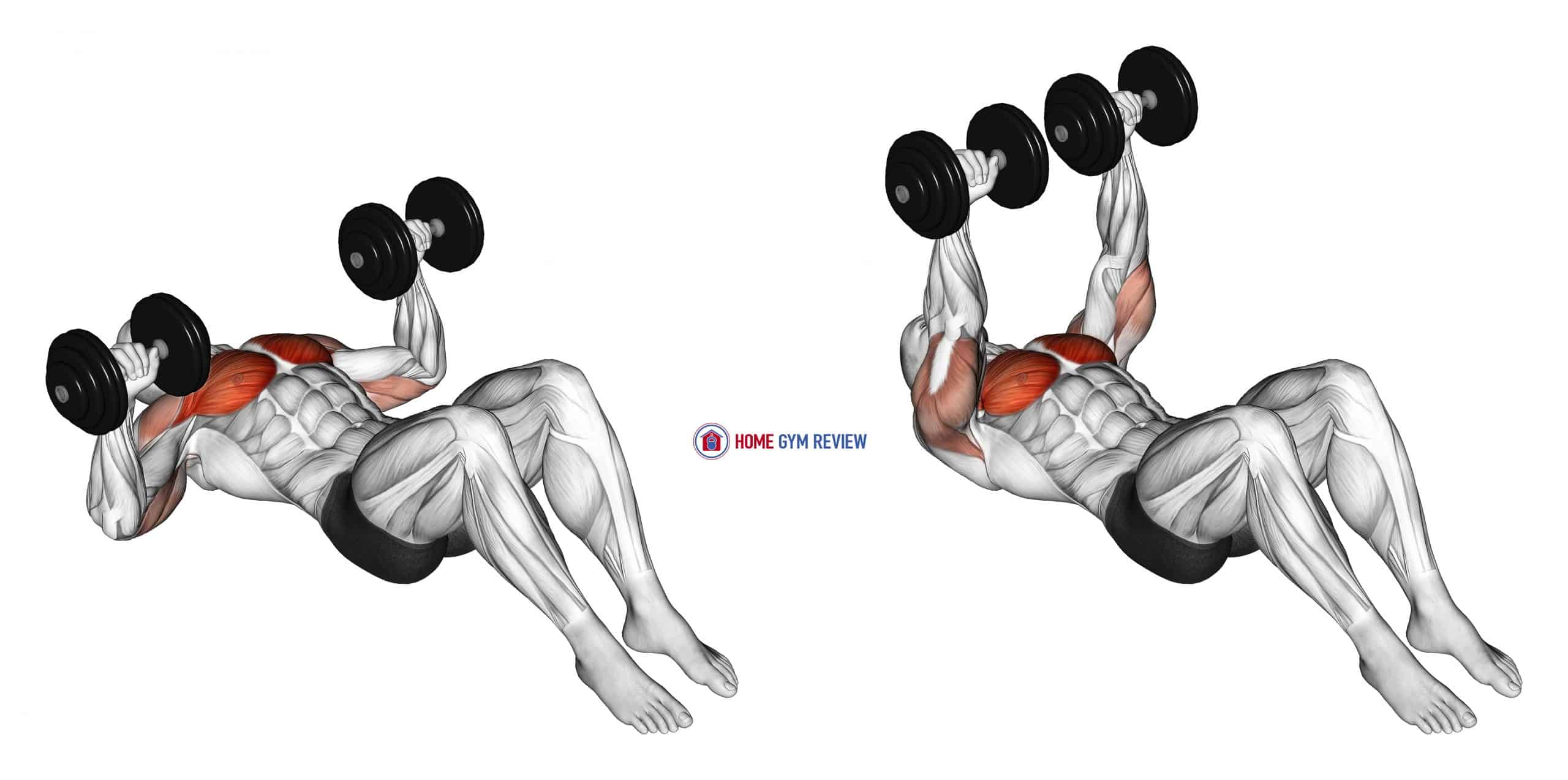 Dumbbell Lying on Floor Chest Press