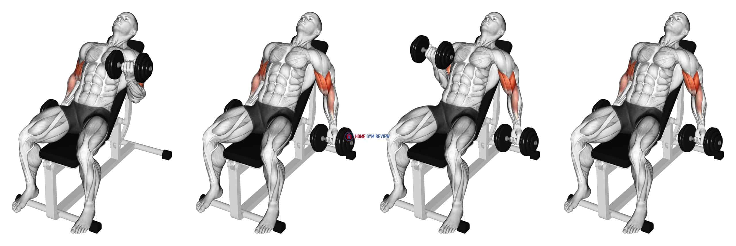 Dumbbell Incline Alternate Bicep Curl