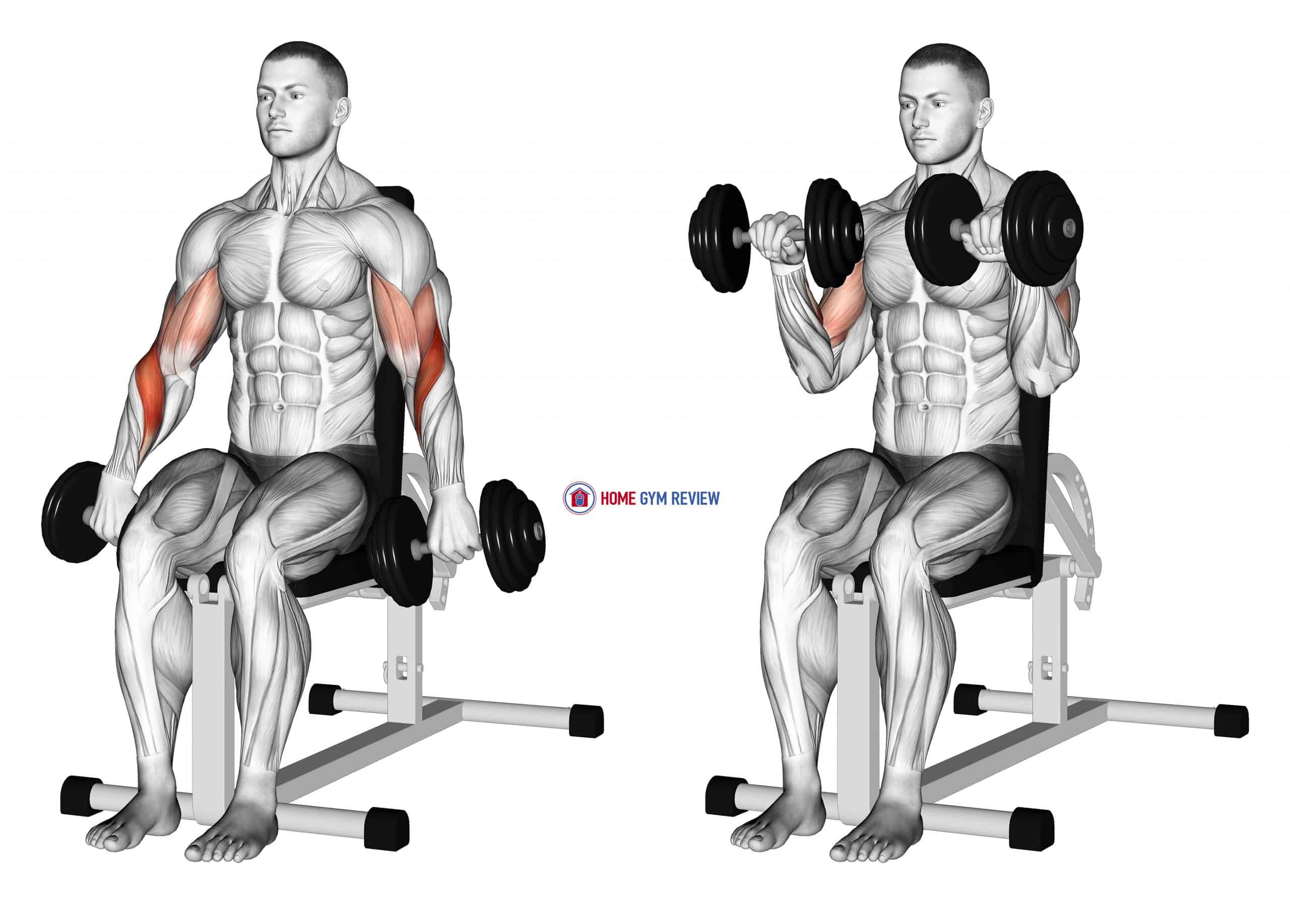 Dumbbell Seated Reverse Grip Biceps Curl