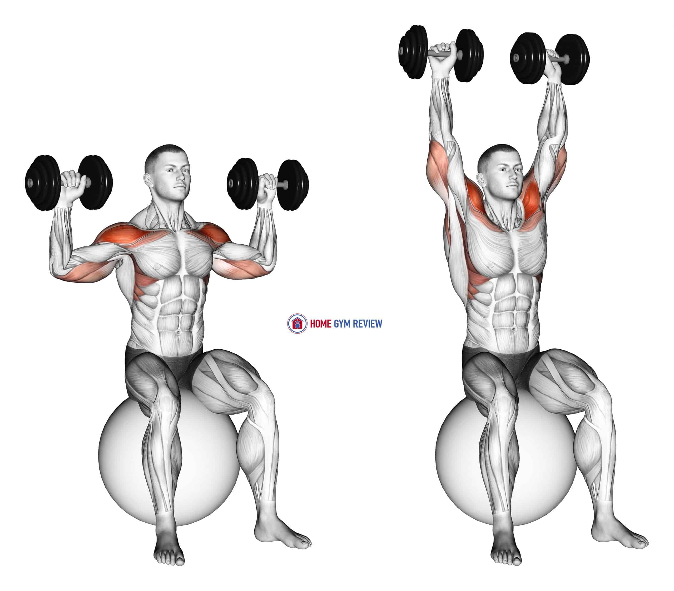 Dumbbell Seated on Exercise Ball Shoulder Press