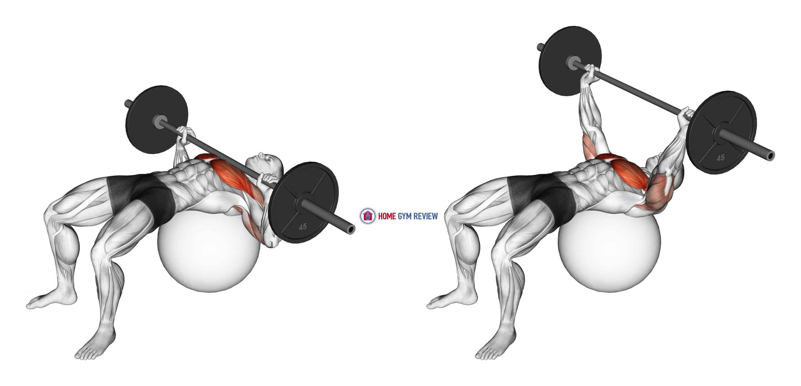 Barbell Chest Press on Stability Ball