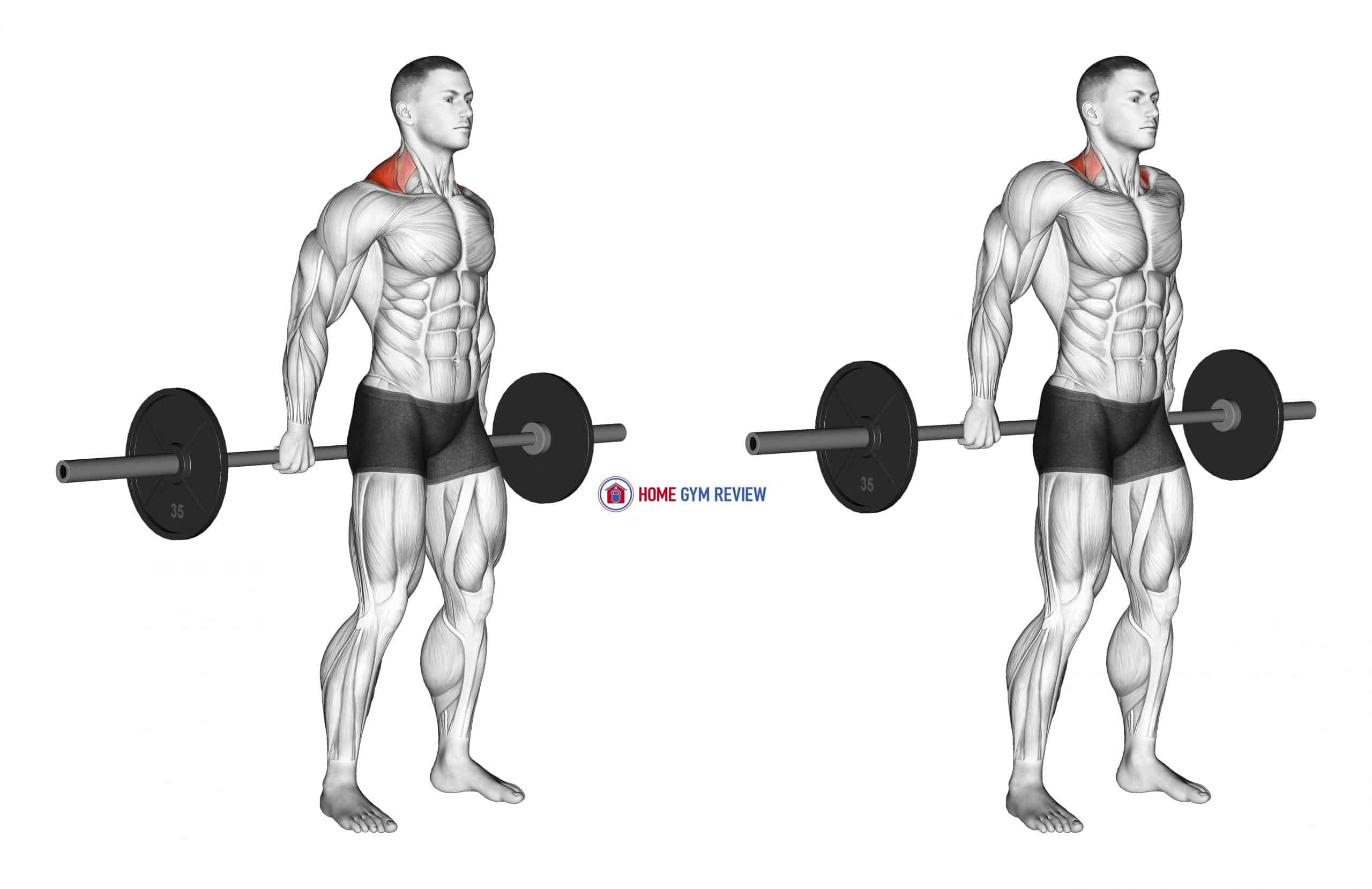 Barbell Behind The Back Shrug