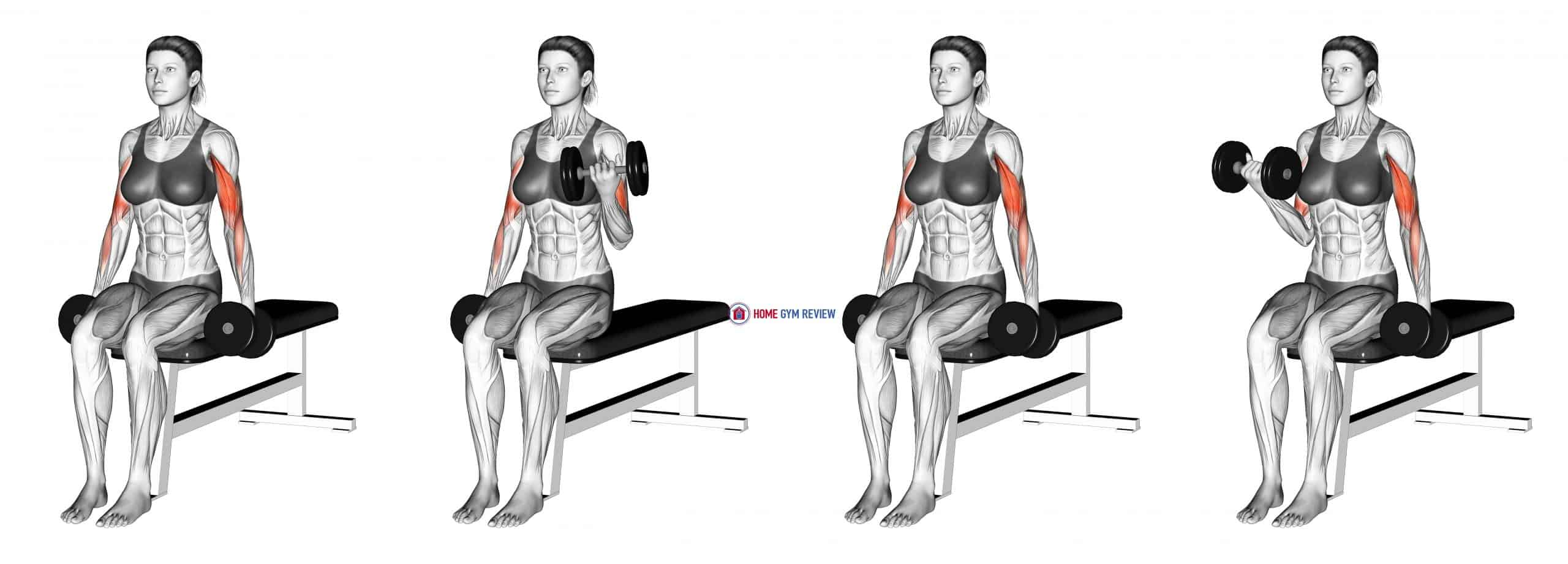 Dumbbell Seated Alternate Biceps Curl (female)