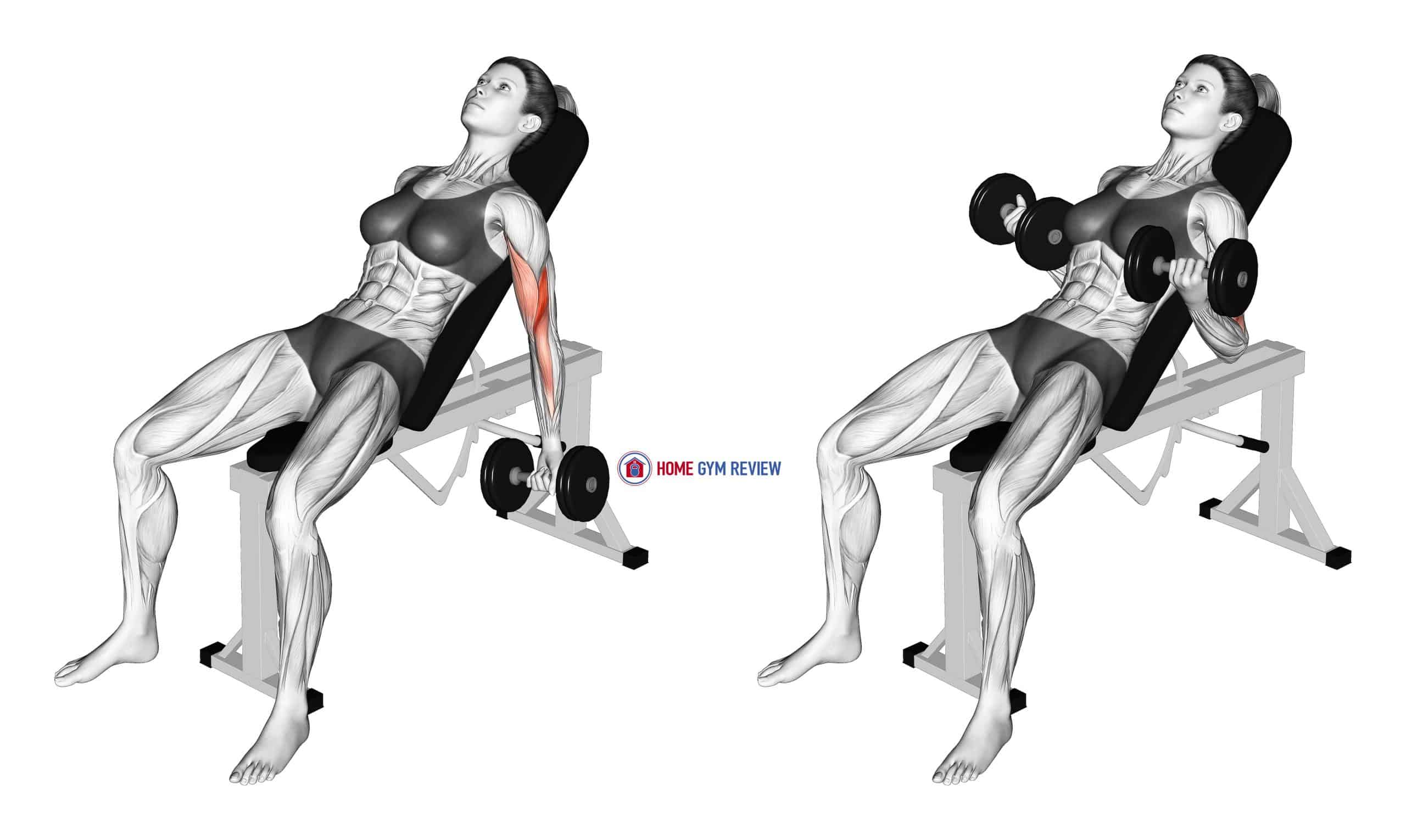 Dumbbell Incline Biceps Curl (female)