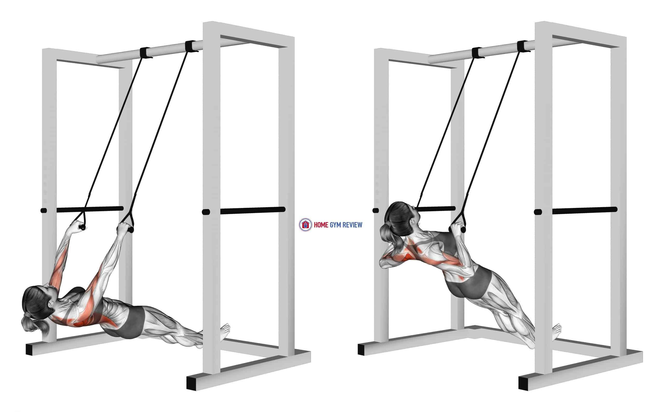 Inverted Row with Straps (female)
