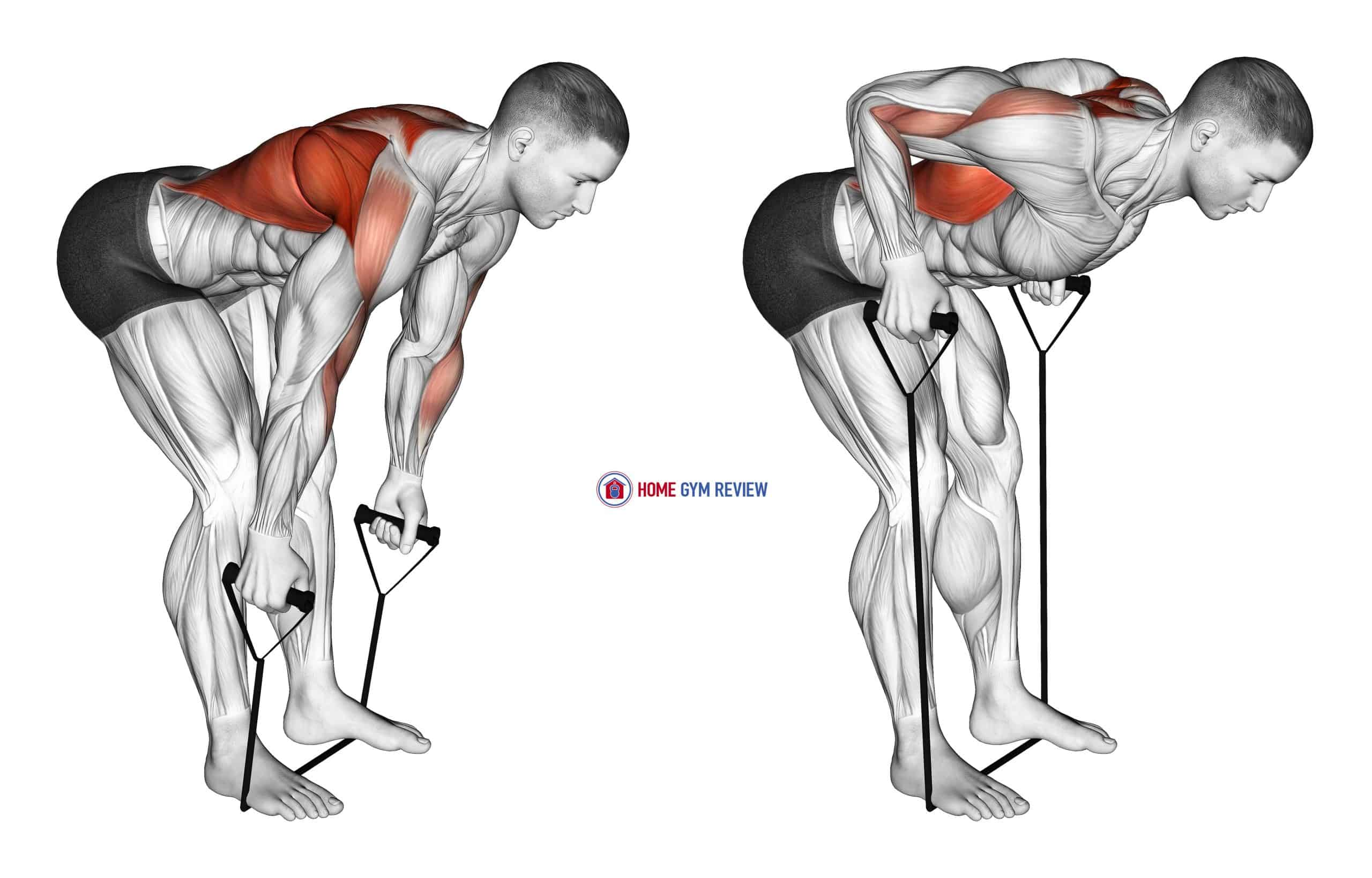 Band Bent Over row (male)