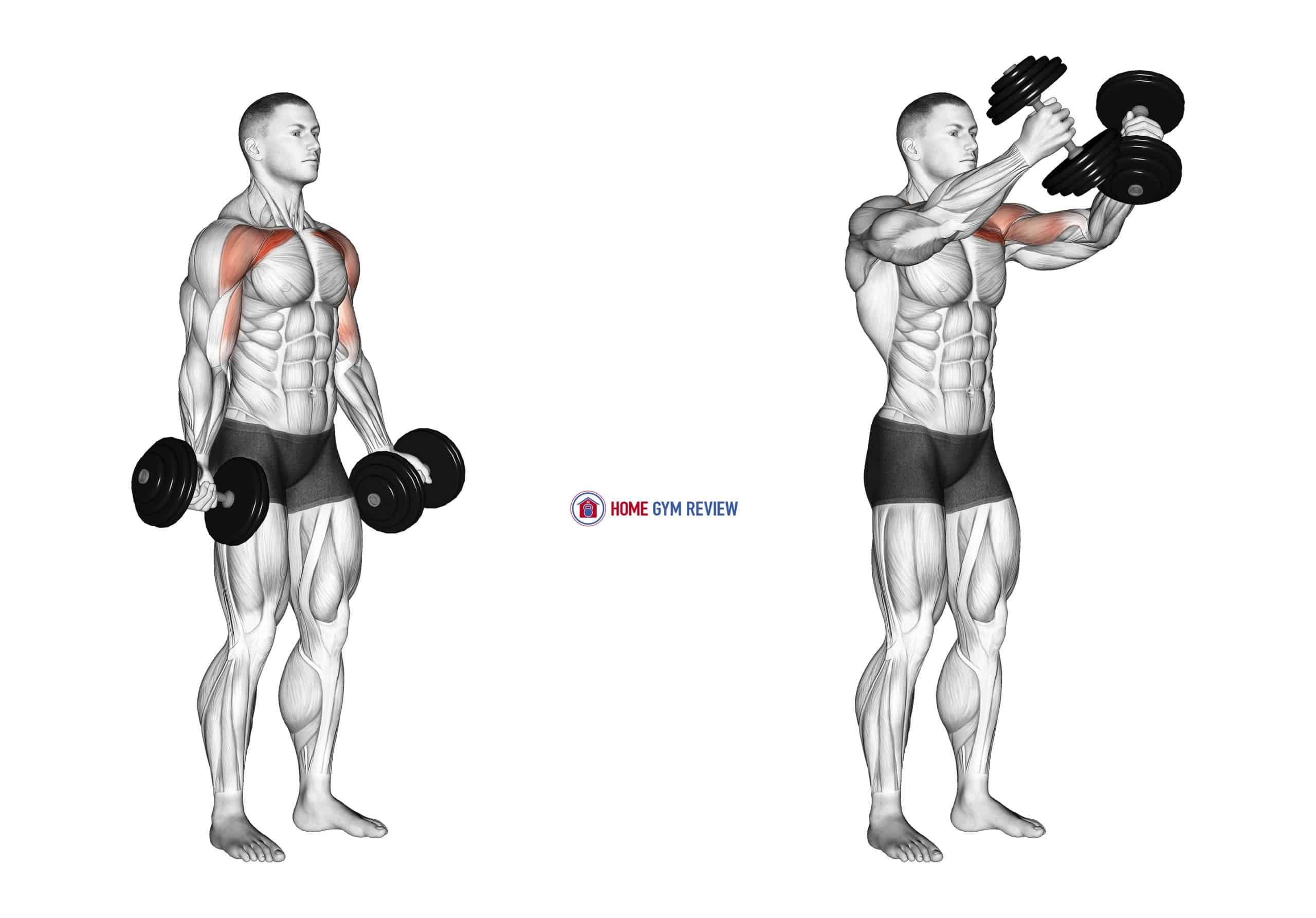 Dumbbell Low Fly