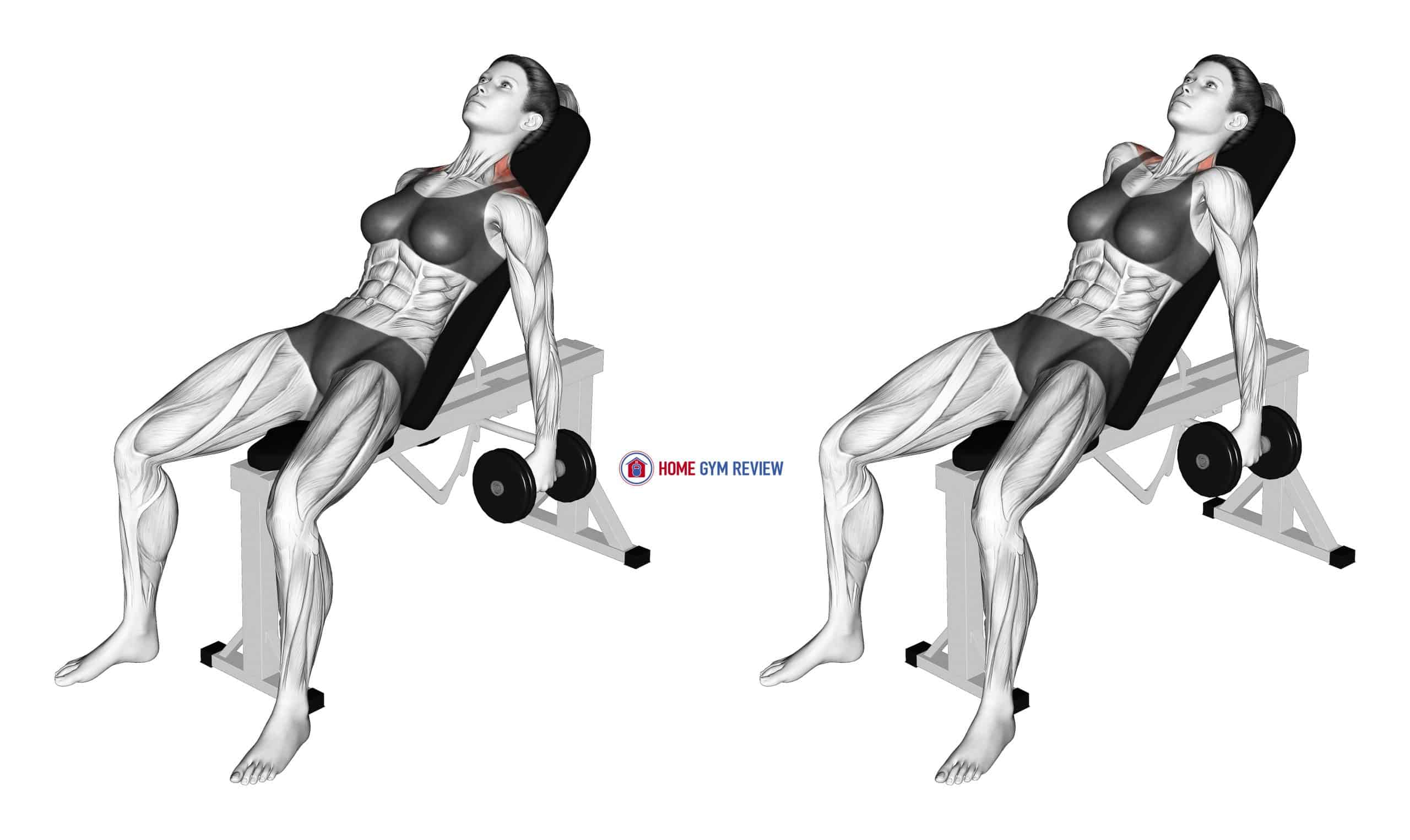 Dumbbell Incline Shrug (female)