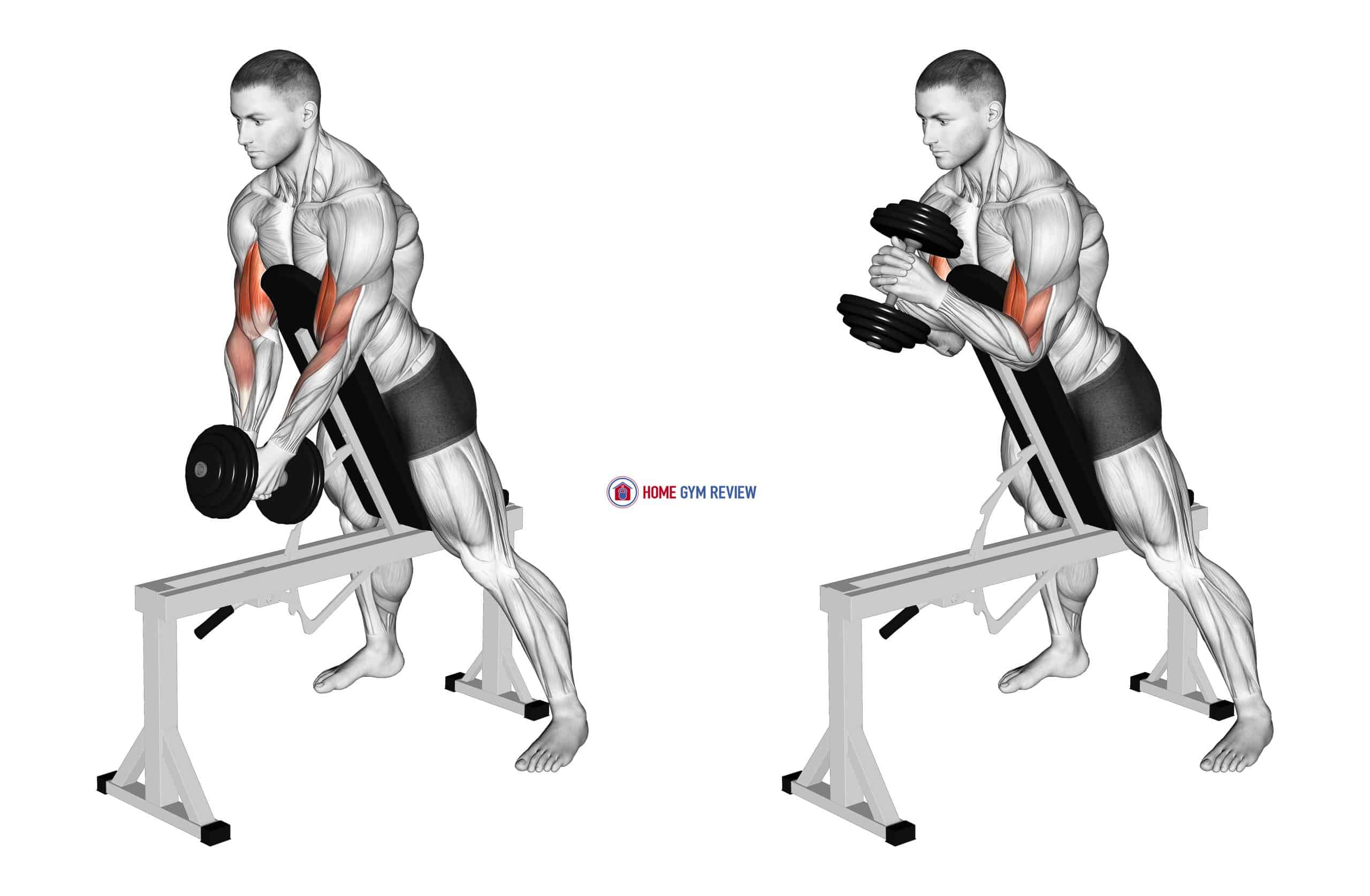 Dumbbell Single Spider Curl with Chest Support