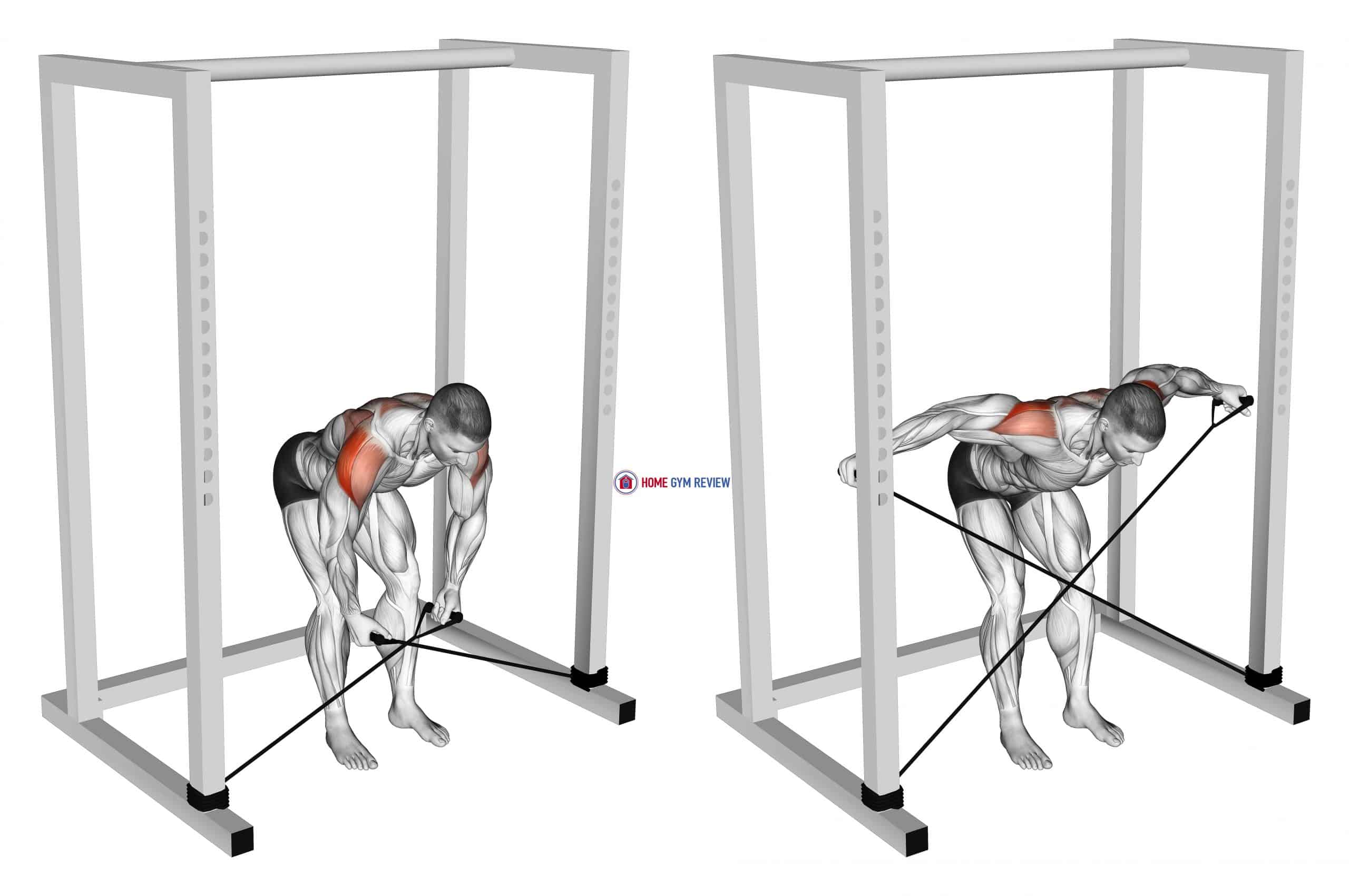 Band bent-over rear lateral raise (male)